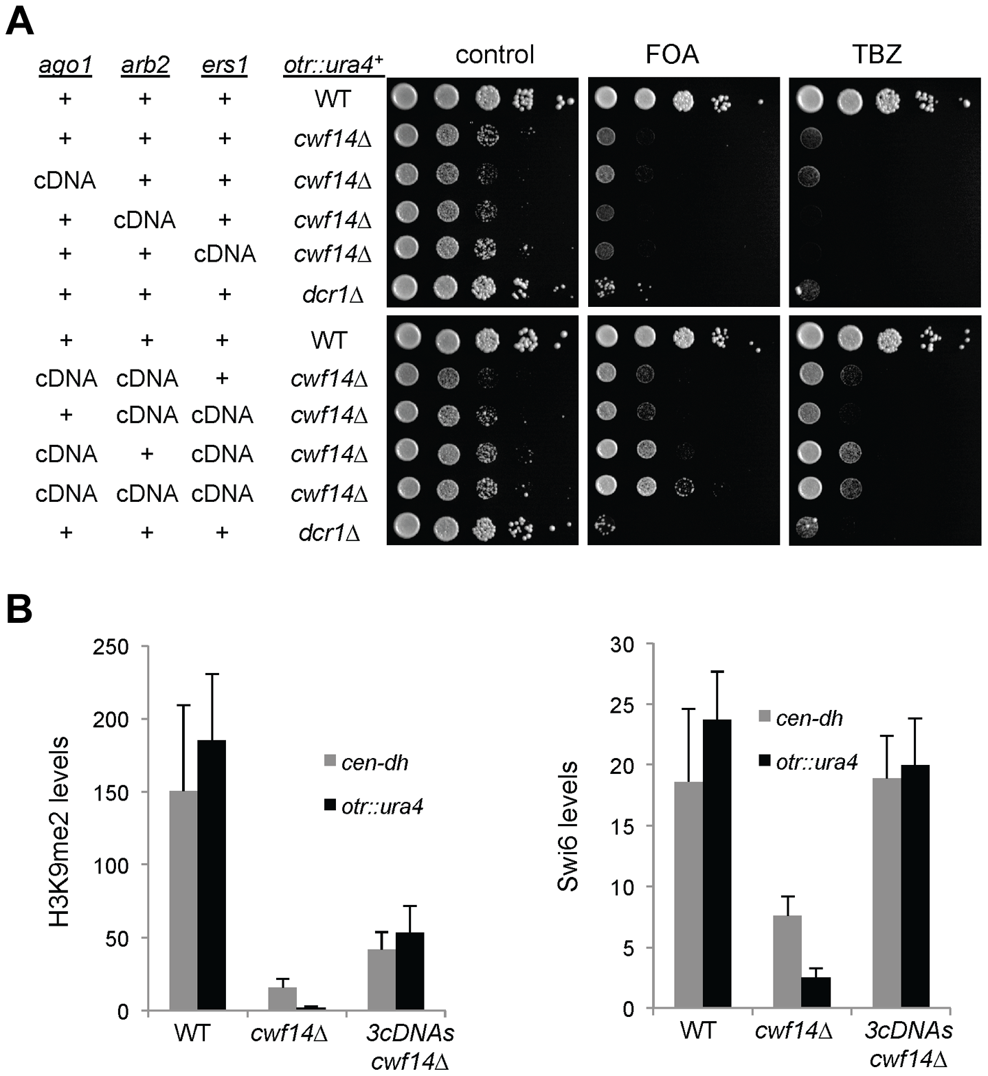 Introducing cDNAs of RNAi factors rescues pericentric heterochromatin defects of <i>cwf14Δ</i> cells.