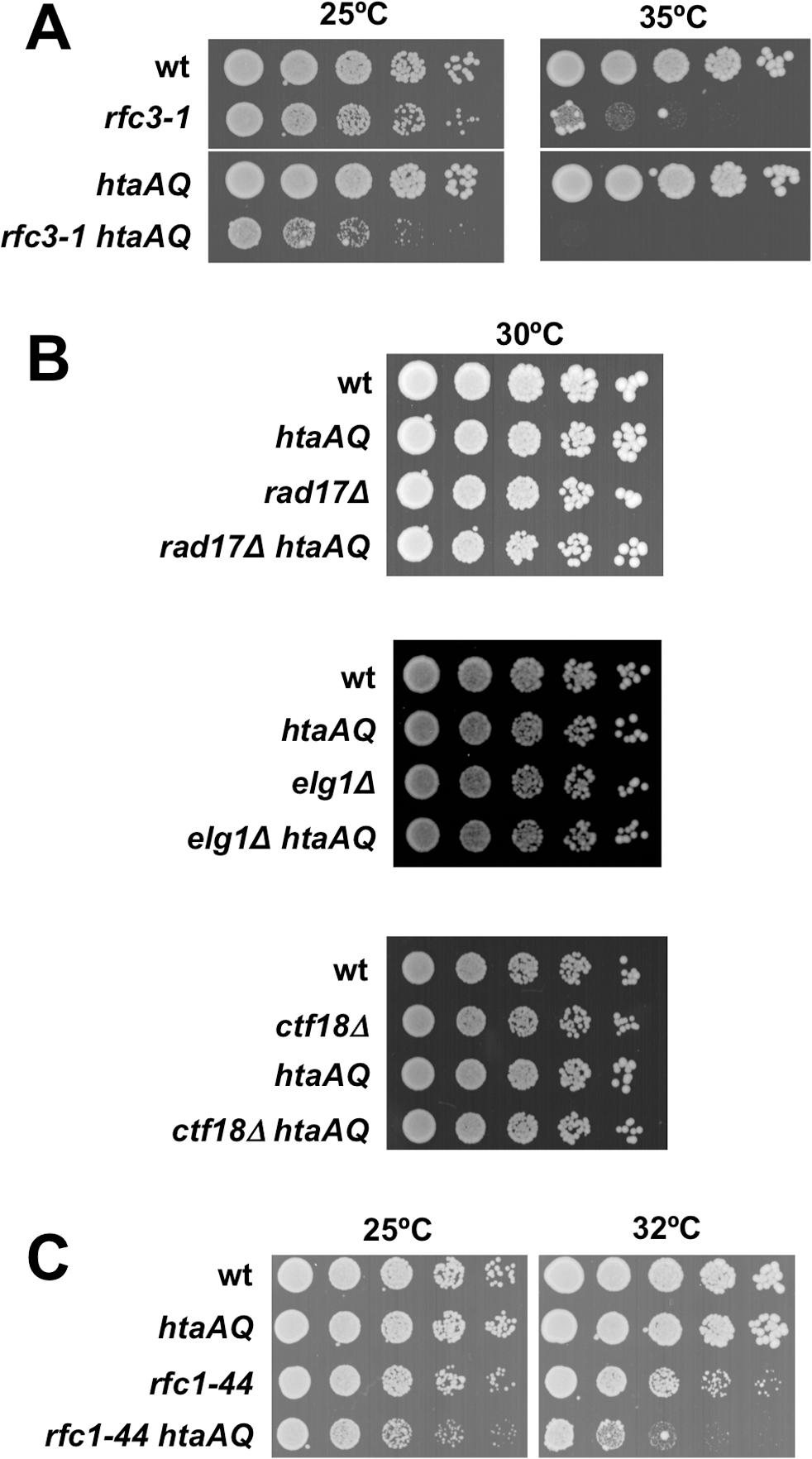 Critical requirement for γH2A when RFC function is impaired.
