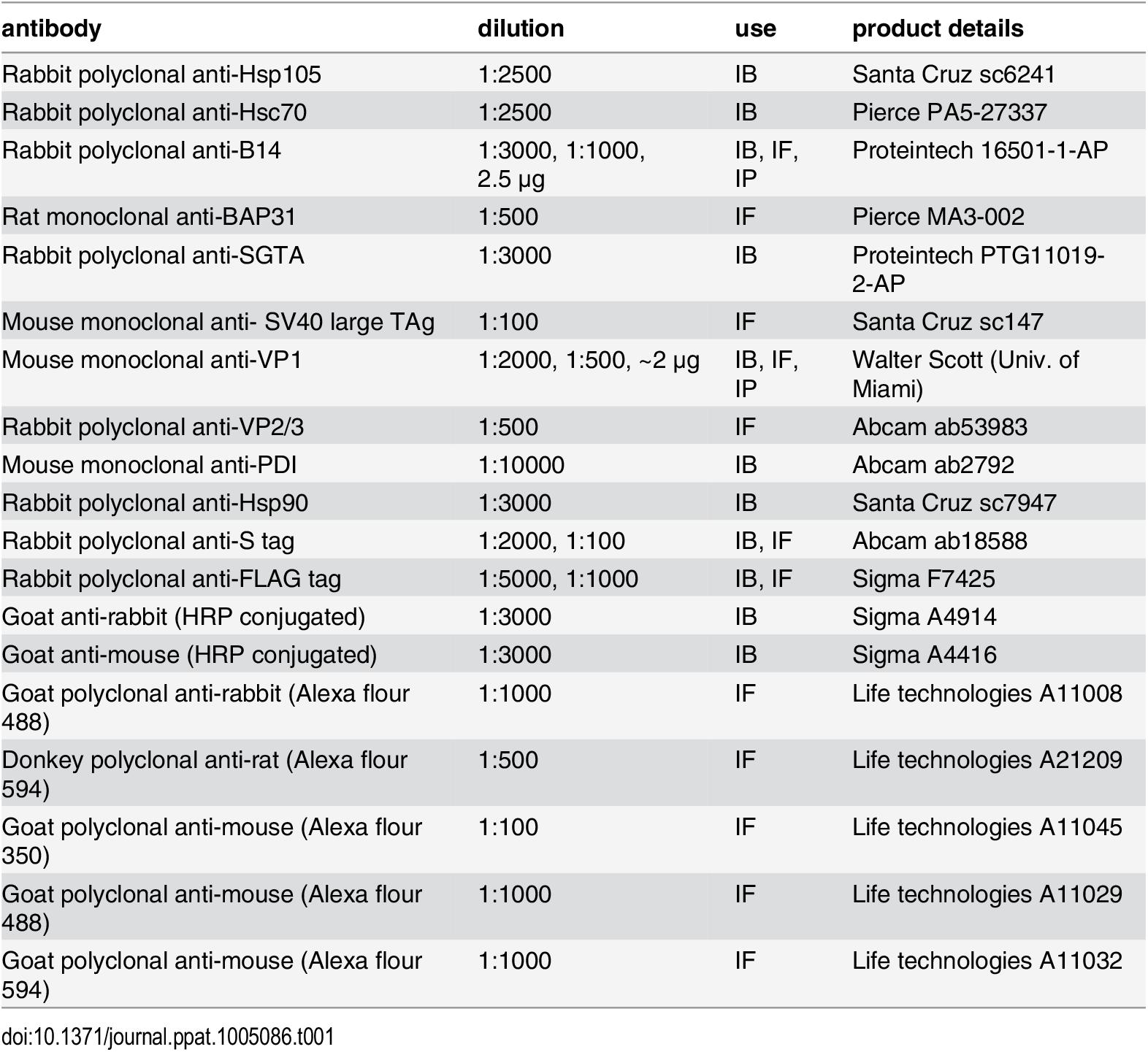 Antibodies used in this study.