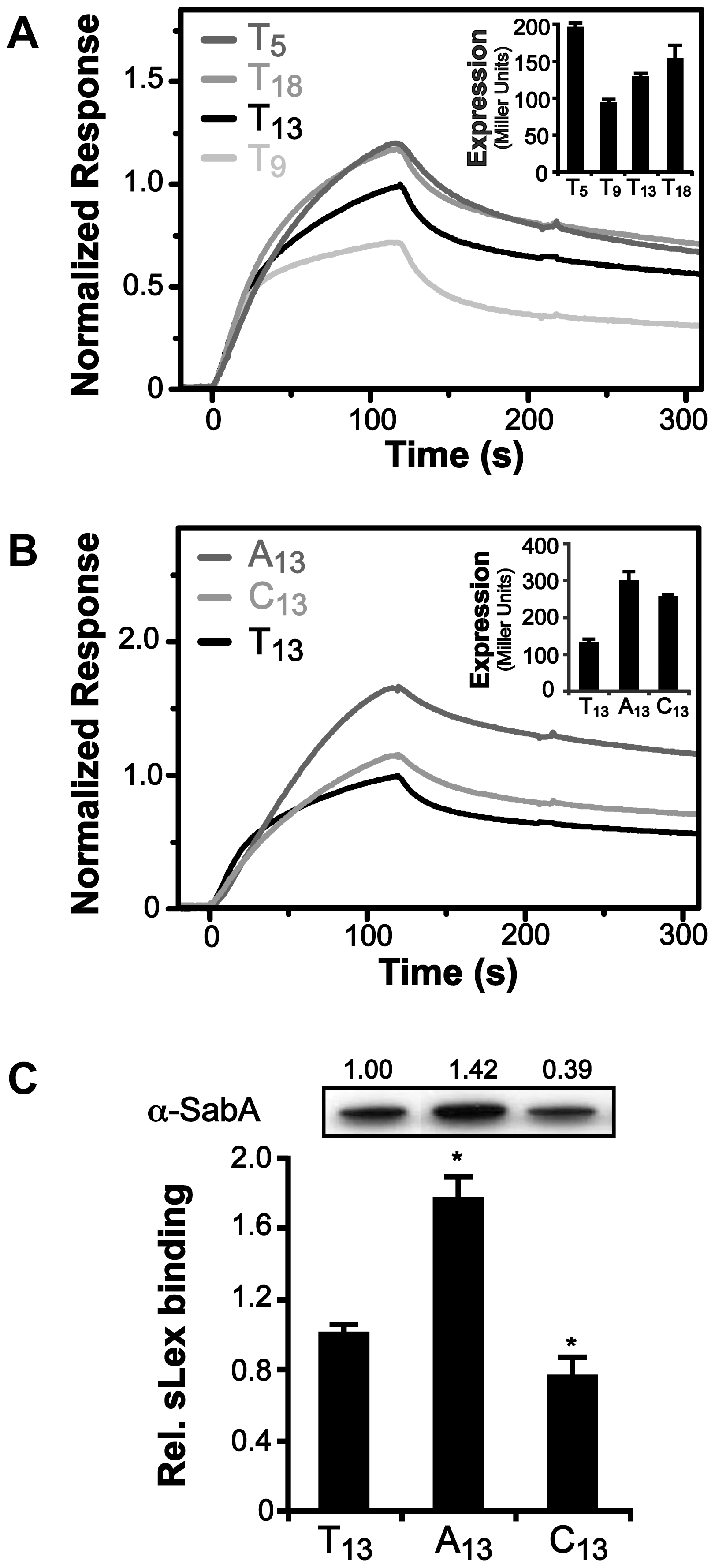 Binding of RNAP to P<i>sabA</i> DNA with varying tract length and nucleotide composition.