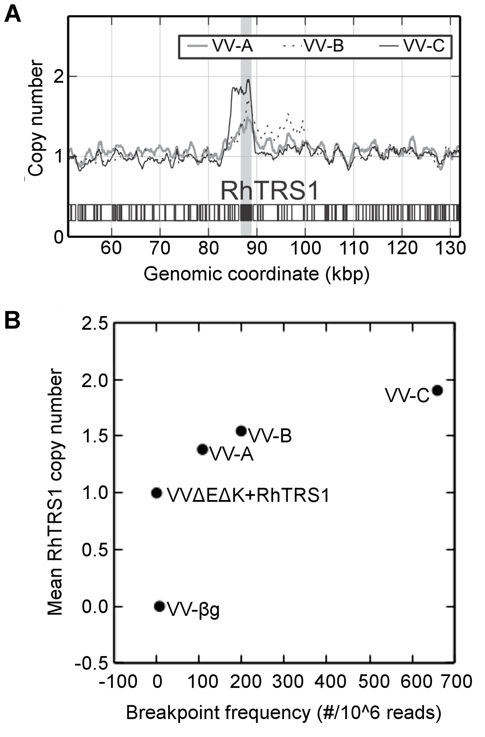 <i>Rhtrs1</i> copy number variation relative to VVΔEΔK+RhTRS1.