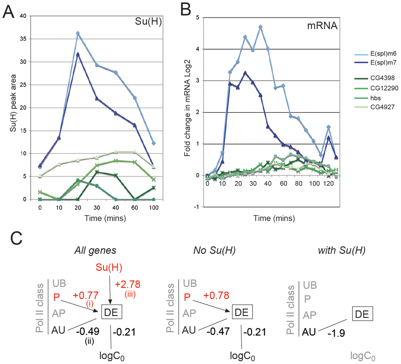 Relationship between Su(H) binding and gene responses.