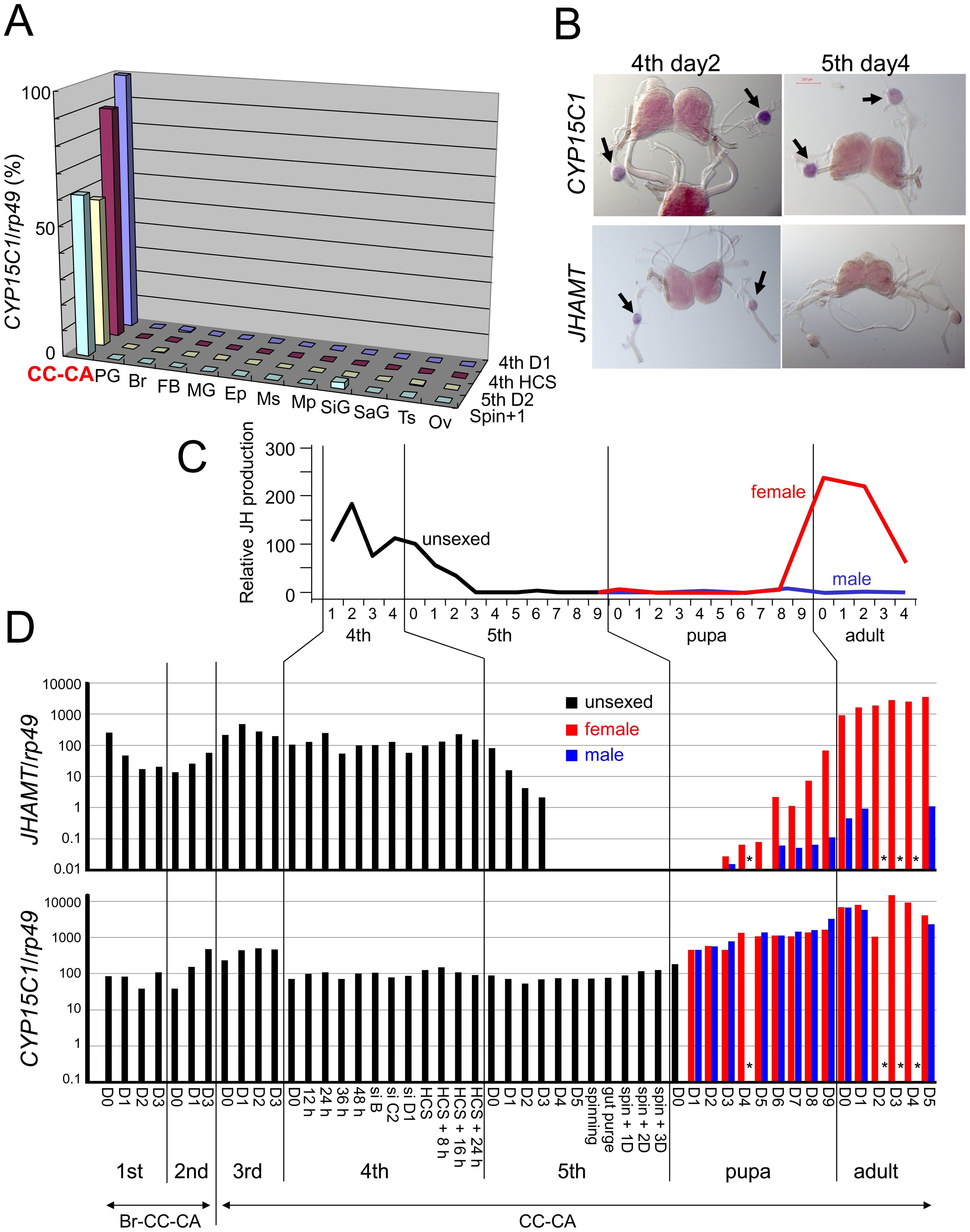 Temporal and spatial expression of <i>CYP15C1</i>.