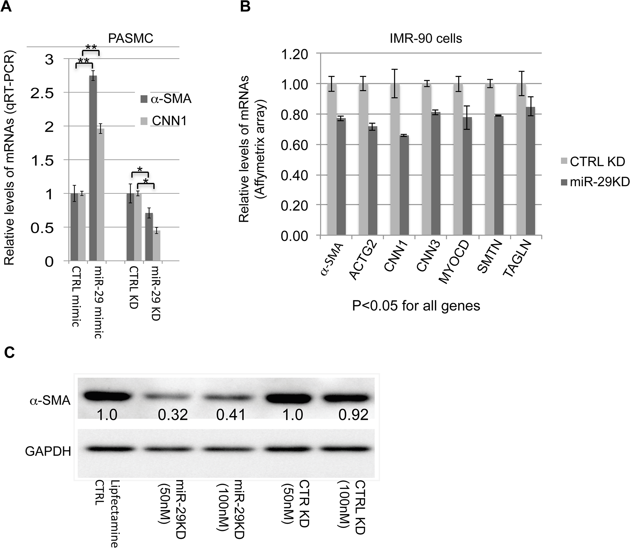 miR-29 promotes the expression of contractile SMC markers.