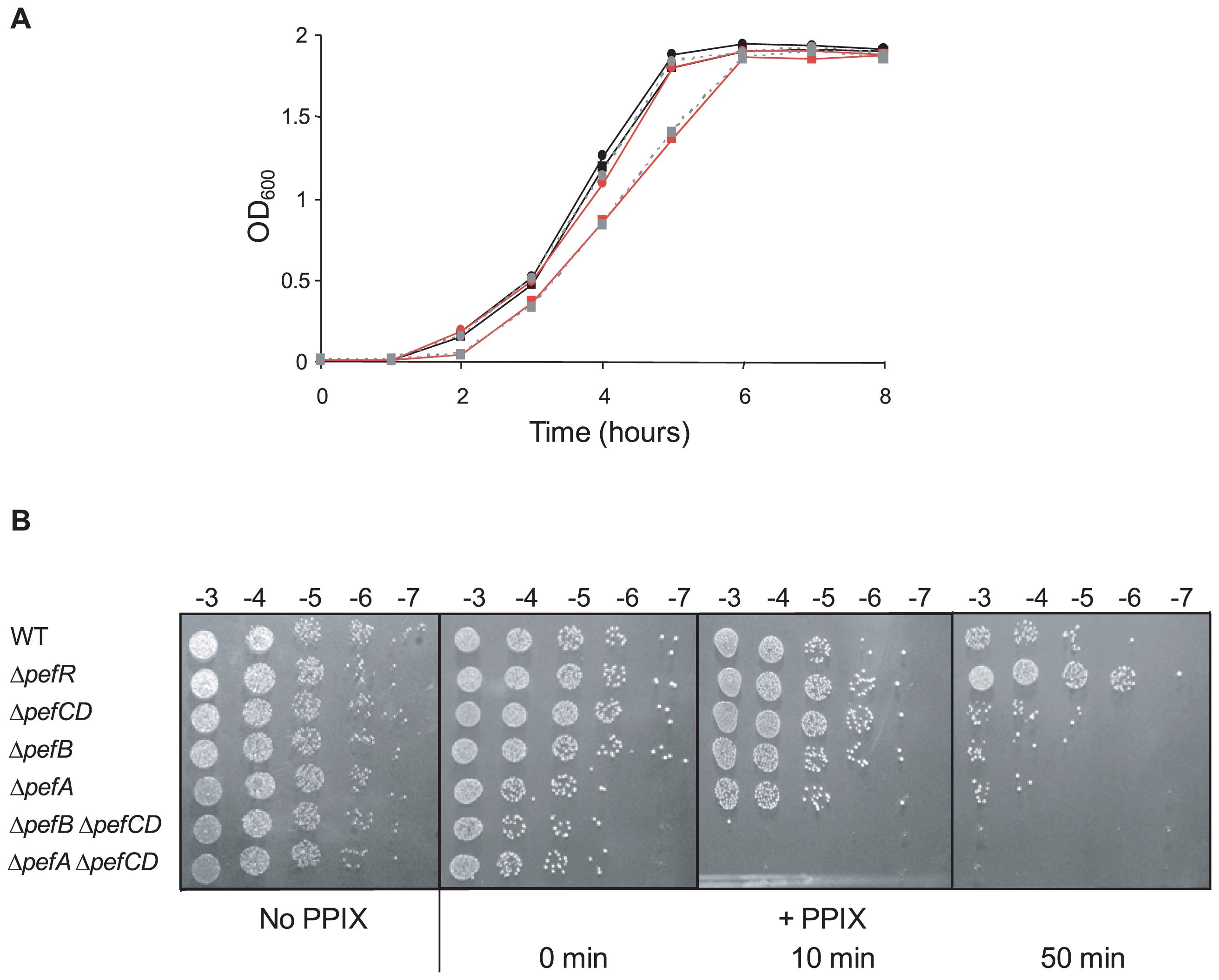 Δ<i>pefAB</i> and Δ<i>pefCD</i> mutants are affected in PPIX and heme sensitivity.