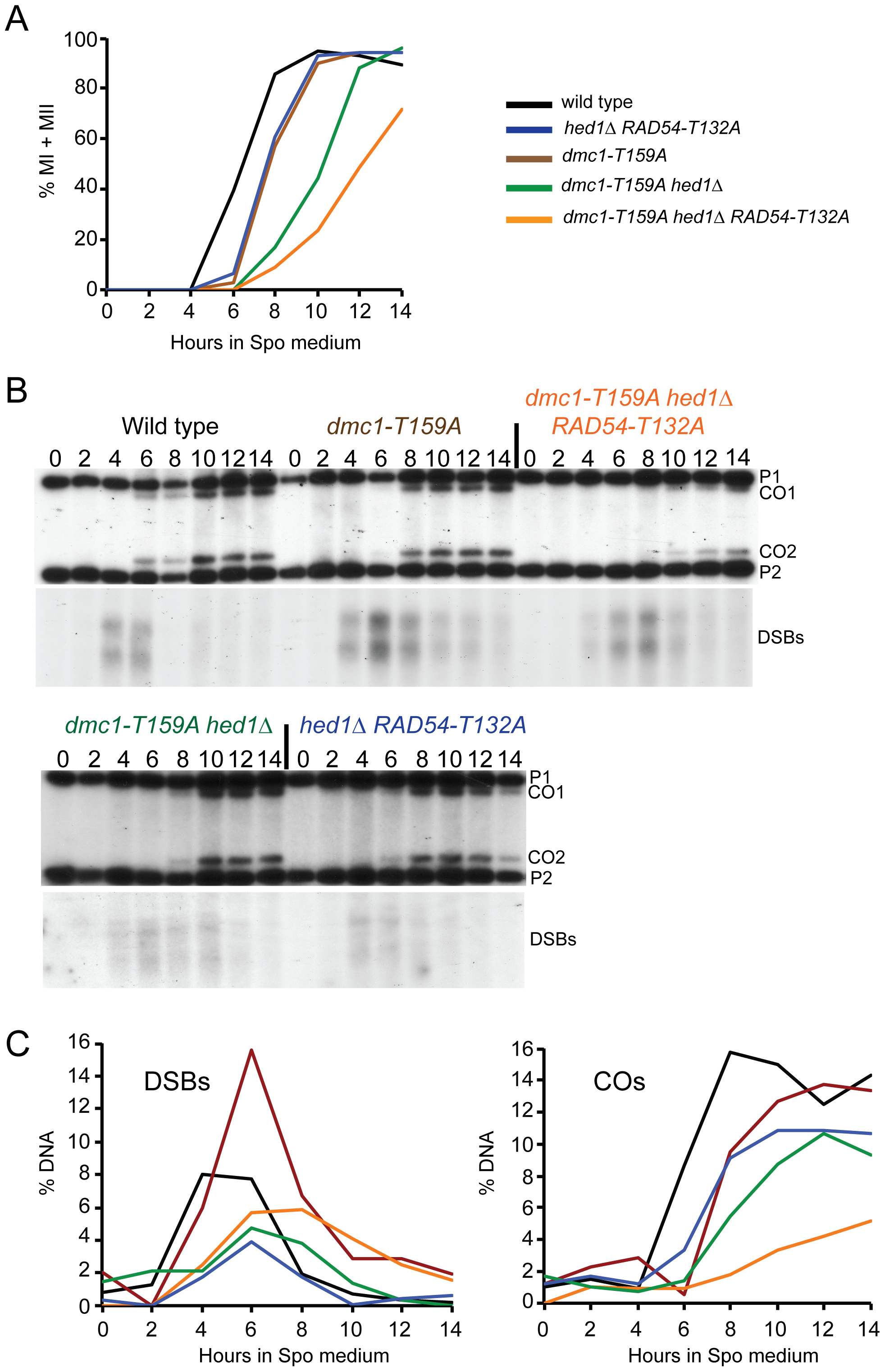 Meiotic progression and crossover formation in various <i>dmc1-T159A</i> SK1 strains.