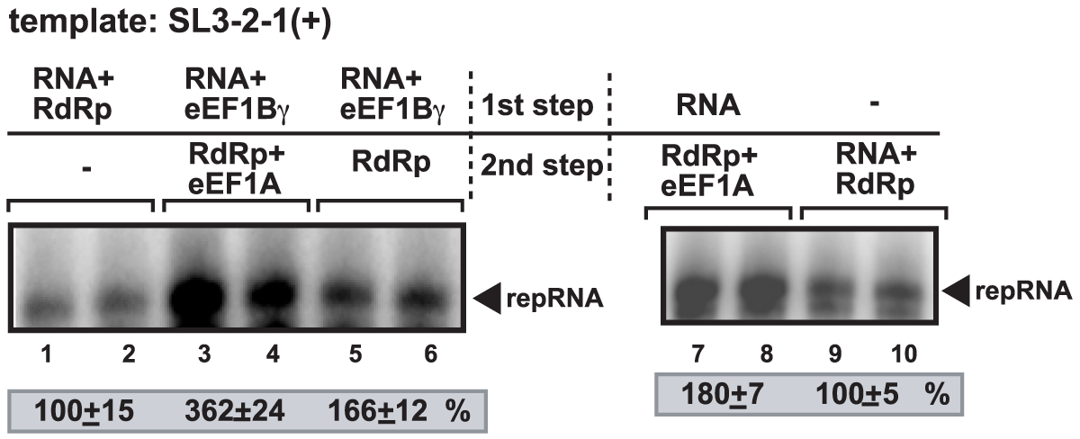 Synergistic effect of eEF1Bγ and eEF1A on stimulation of minus-strand synthesis by the closely-related TCV RdRp.