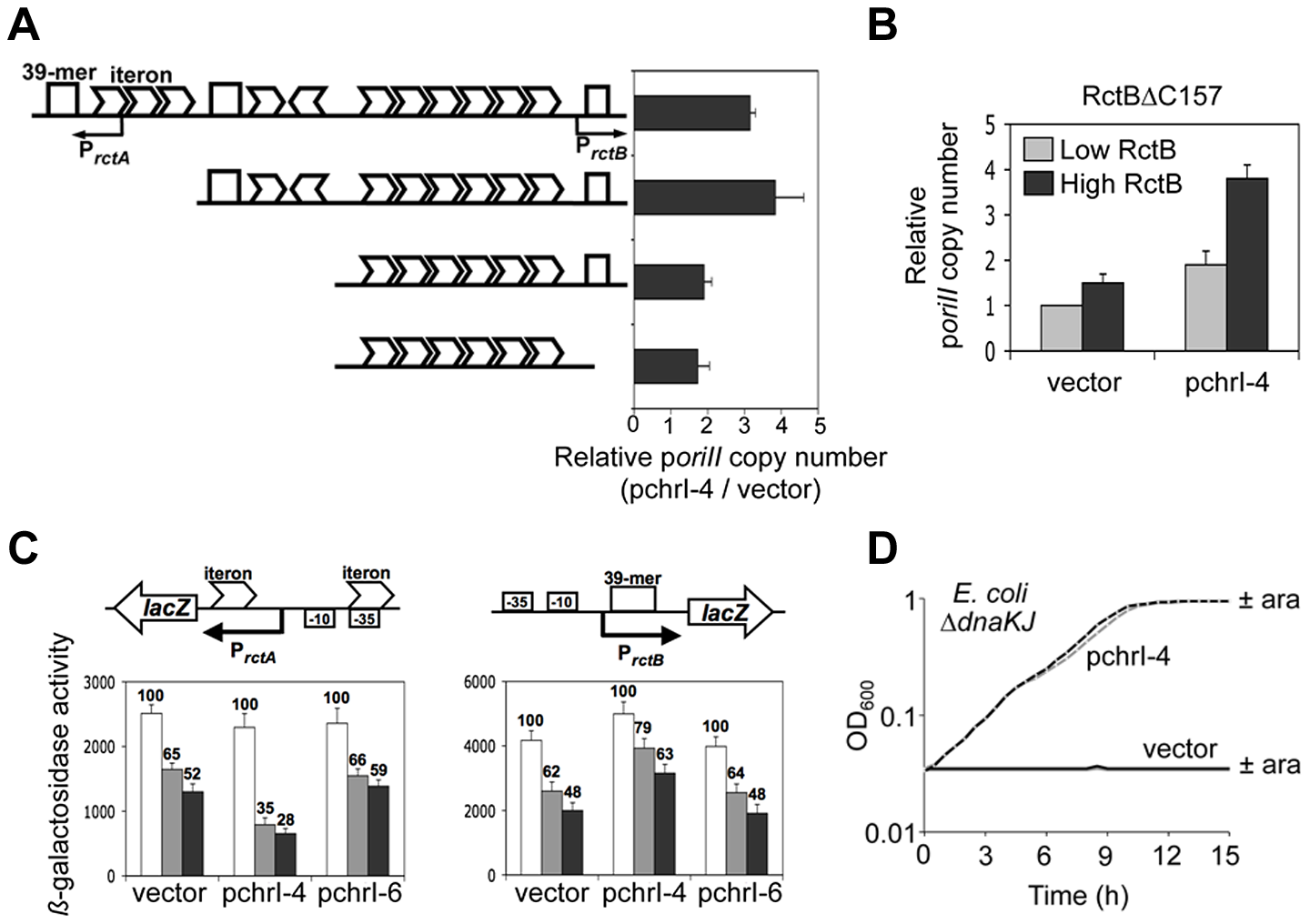 The chrI site modulates DNA binding of RctB and enhances p<i>oriII</i> activity in Δ<i>dnaKJ</i> host.