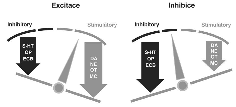 Mechanismy sexuální inhibice a excitace. DA - dopamin, NE - noradrenalin, MC - melanokortiny, OT - oxytocin, OP - opioidy, ECB - endokanabioidy, SE - serotonin Zdroj: Pfaus, J. J Sex Med, 2009. Převzato dle: Jansen, E., Bancroft, J. The dual kontrol model. The role of sexual inhibitioin and exciation in sexual arousal and behaviour. The psychiophysiology of sex. Edited by Janssen, E., Bloomington: Indiana University Press, 2007, p. 197-222