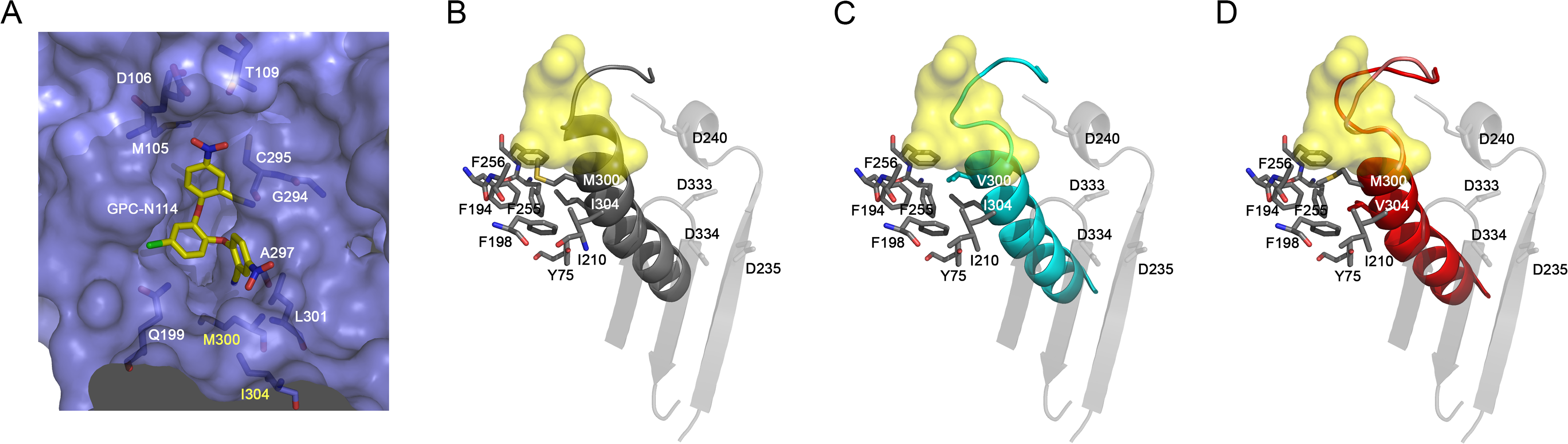 Effects of mutations M300V and I304V on the GPC-N114 binding site in EMCV 3D<sup>pol</sup>.