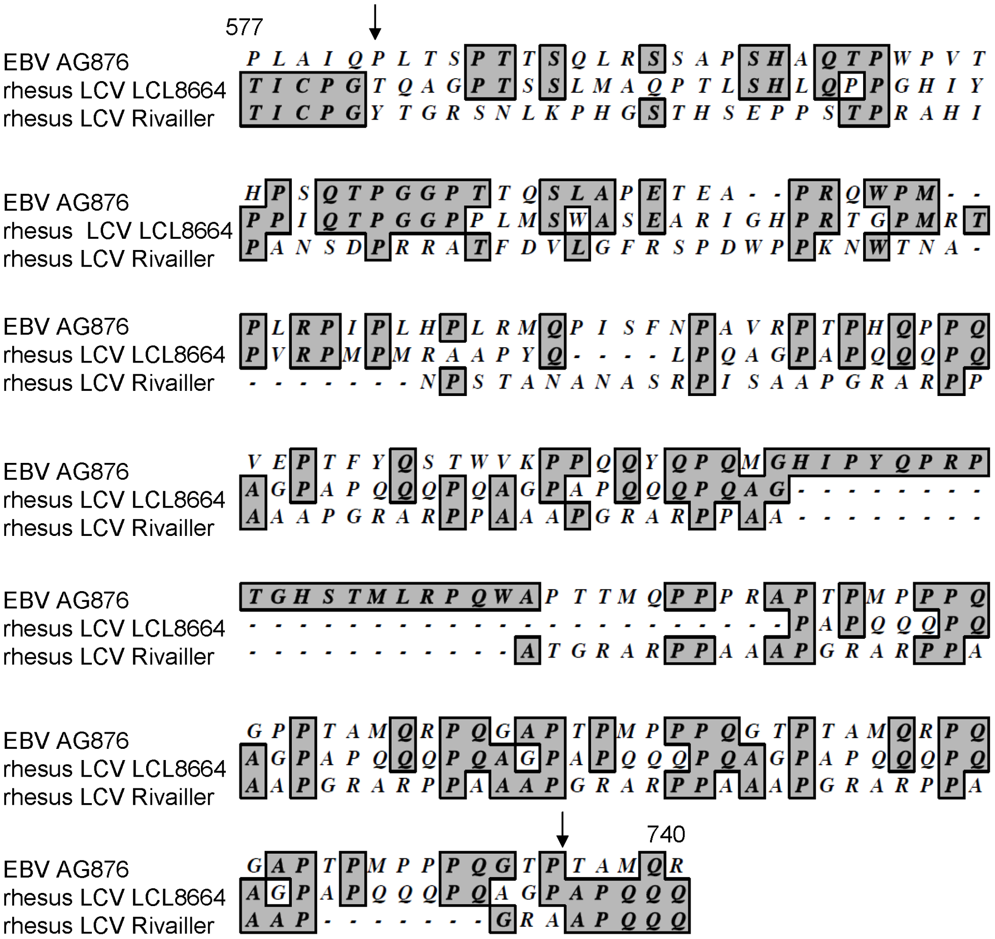Alignment of amino acids 577−740 of rhesus LCV EBNA-3B from LCL8664 cells (middle lines) with the previously published sequence (<em class=&quot;ref&quot;>[<b>21</b>]</em>, lower lines), and amino acids 571−768 of EBV AG876 EBNA-3B (top lines).