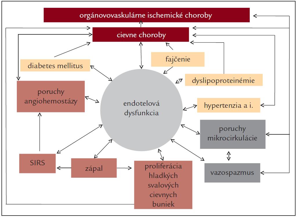 Dysfunkcia endotelu a zložité vzájomné vzťahy s vaskulárnymi rizikovými faktormi a patologickými mechanizmami v patogenéze cievnych artériových chorôb a orgánovovaskulárnych artériových chorôb.