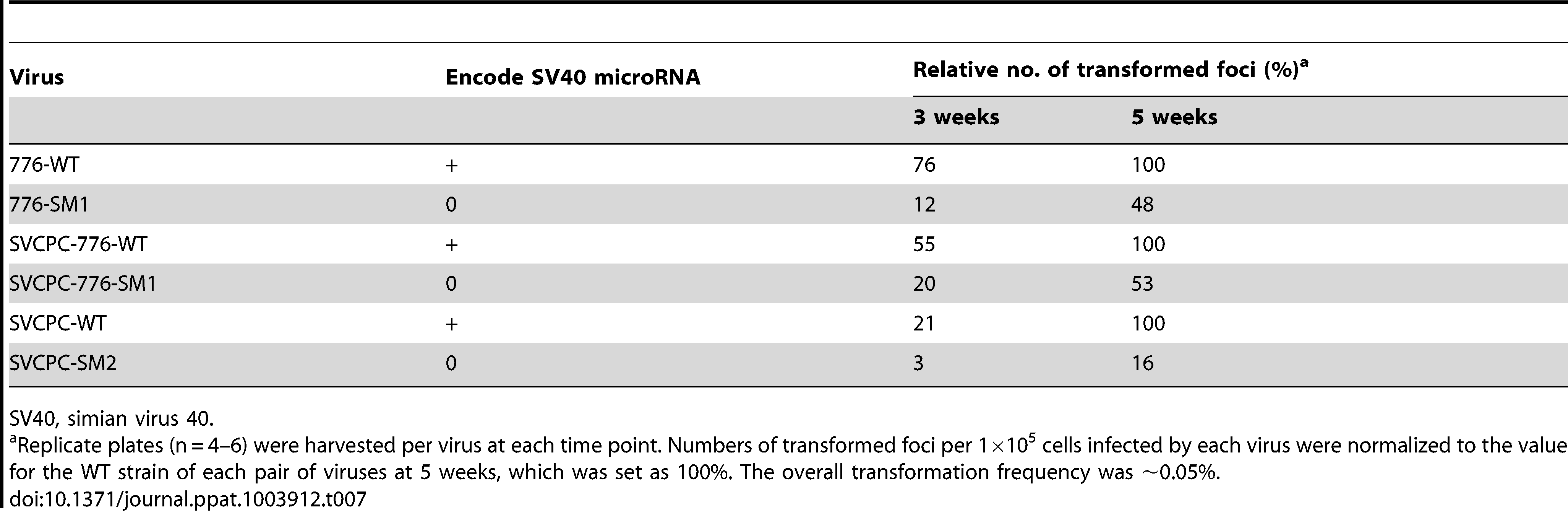 Transformation of primary mouse embryo fibroblasts by SV40 parental and microRNA-negative viruses.