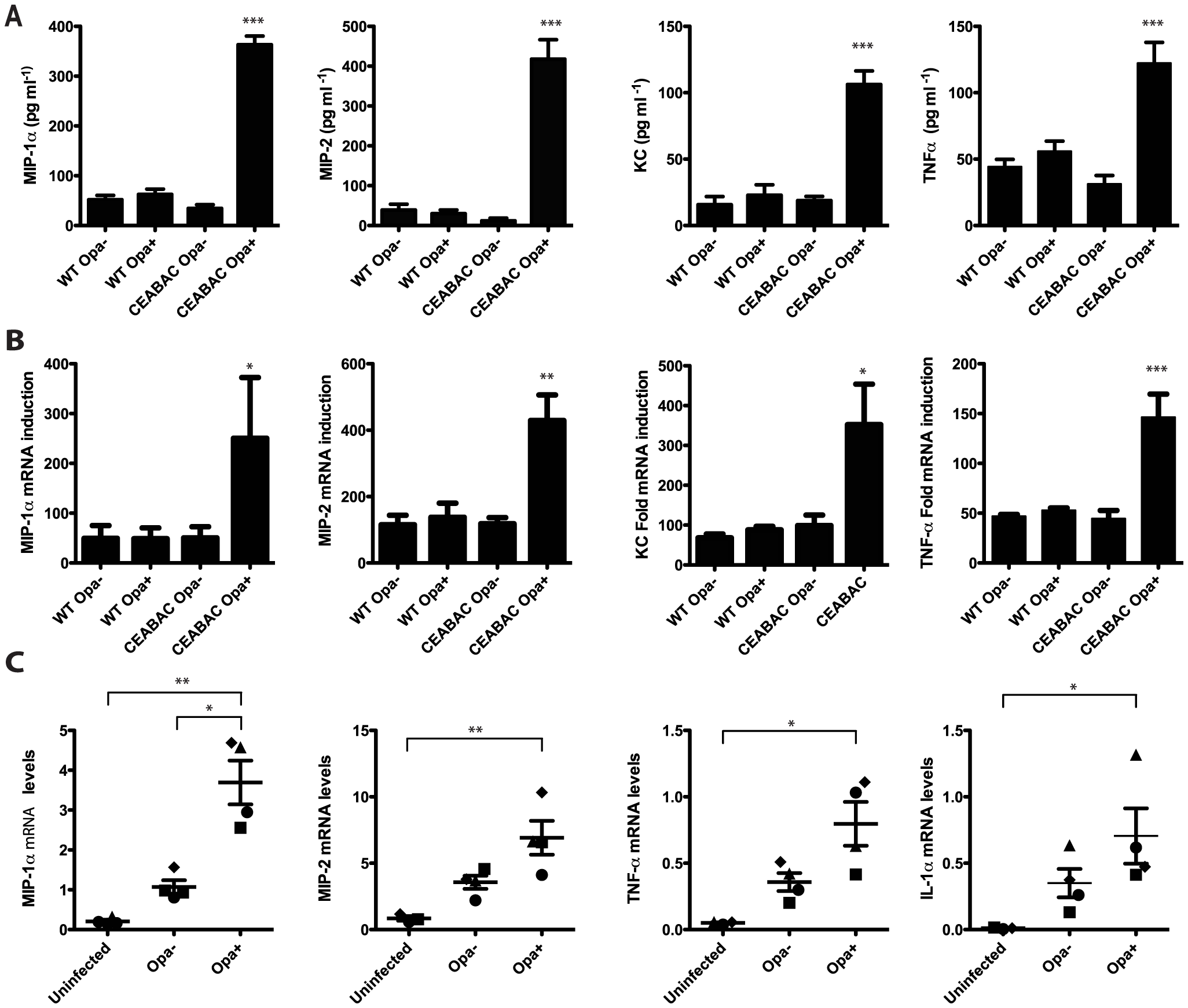 Opa-expressing <i>N. gonorrhoeae</i> drive CEACAM-dependent production of pro-inflammatory cytokines in neutrophils.