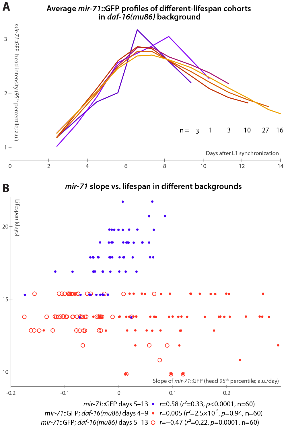 <i>mir-71</i>::GFP levels do not positively correlate with longevity absent DAF-16.