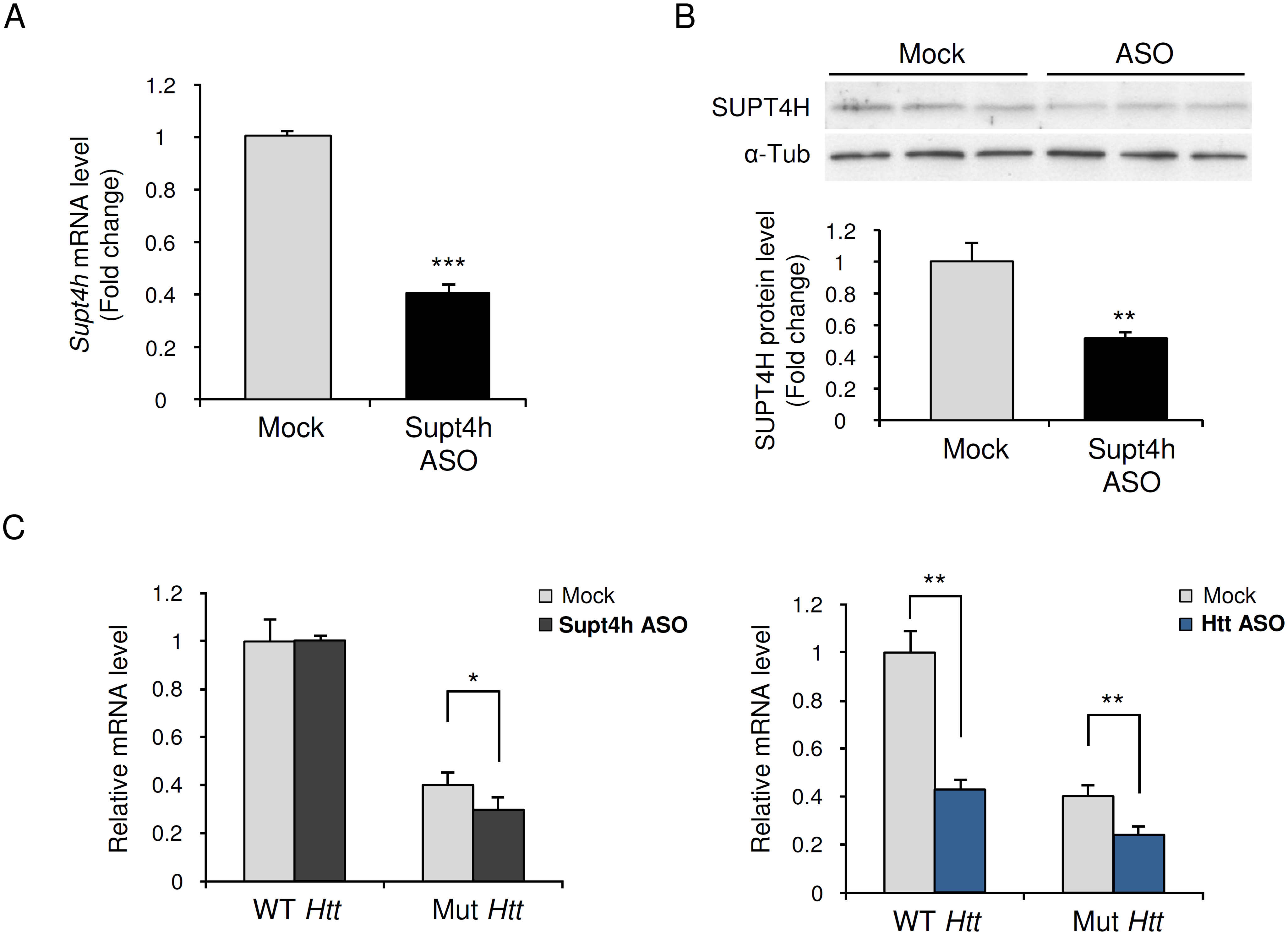 Effect of down regulation by Supt4h ASO on expression of mutant and wild-type <i>Htt</i> alleles in zQ175 HD mice.