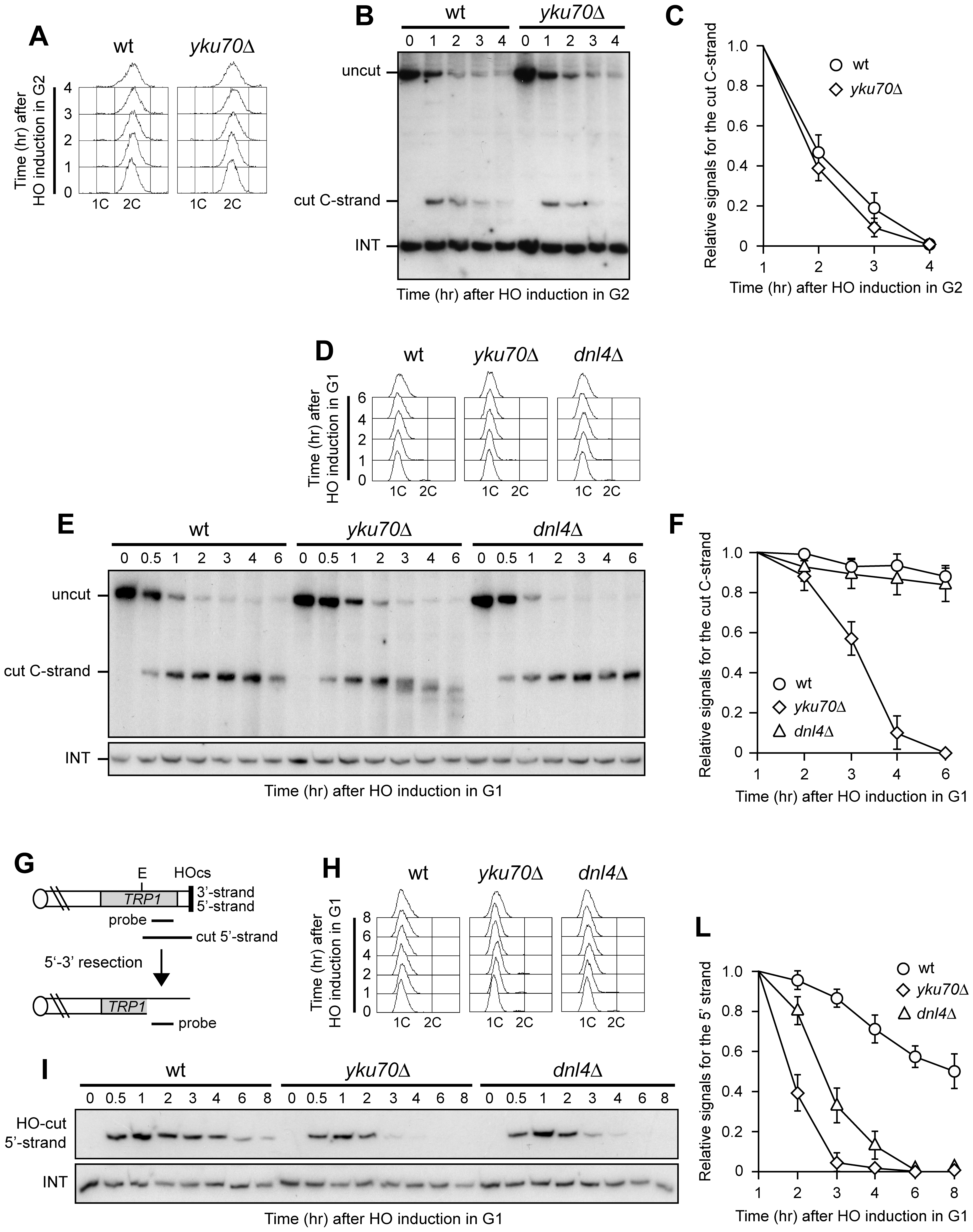 Yku inhibits resection at a de novo telomere specifically in G1.