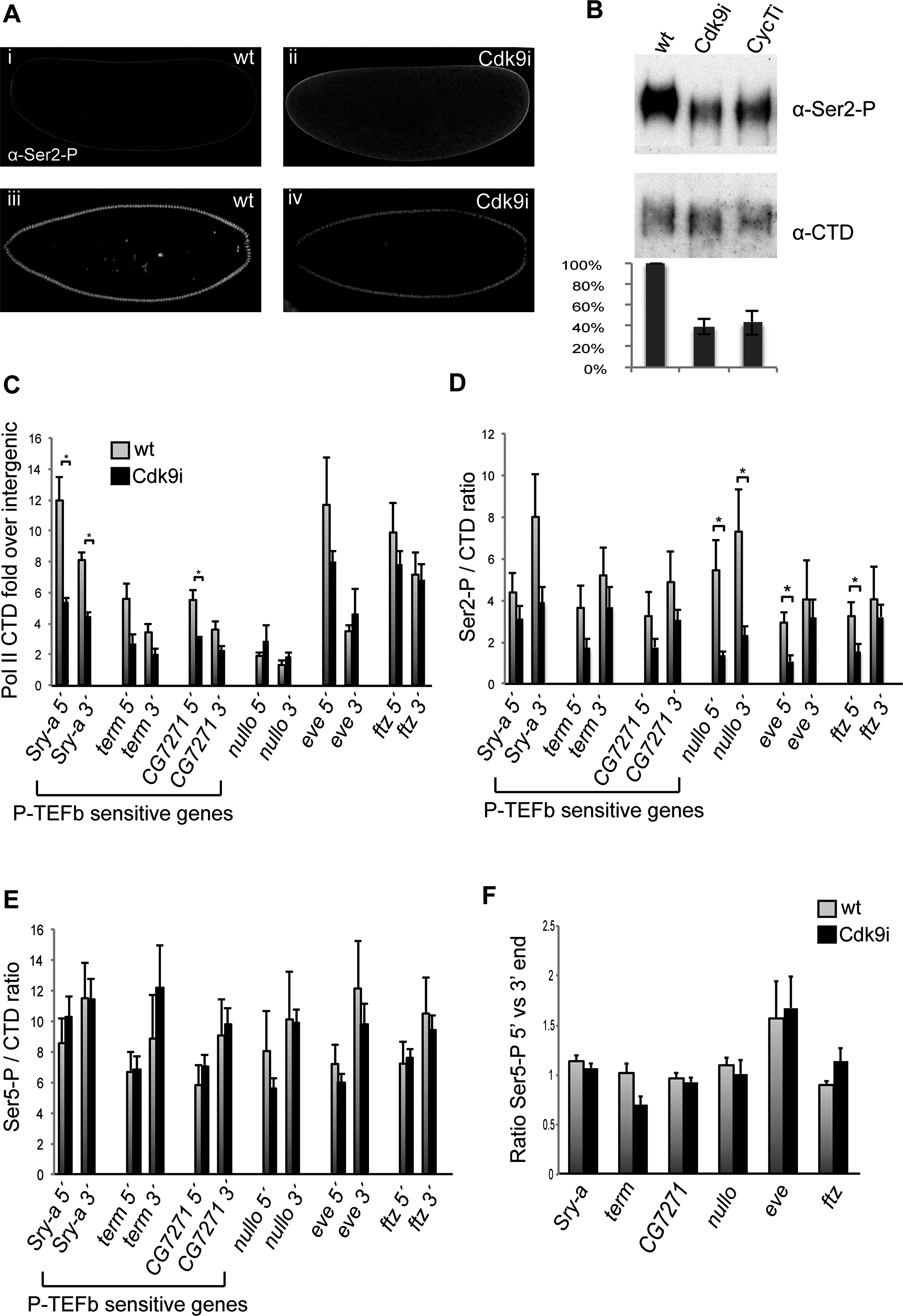 Pol II occupancy is reduced at genes affected by P-TEFb depletion.