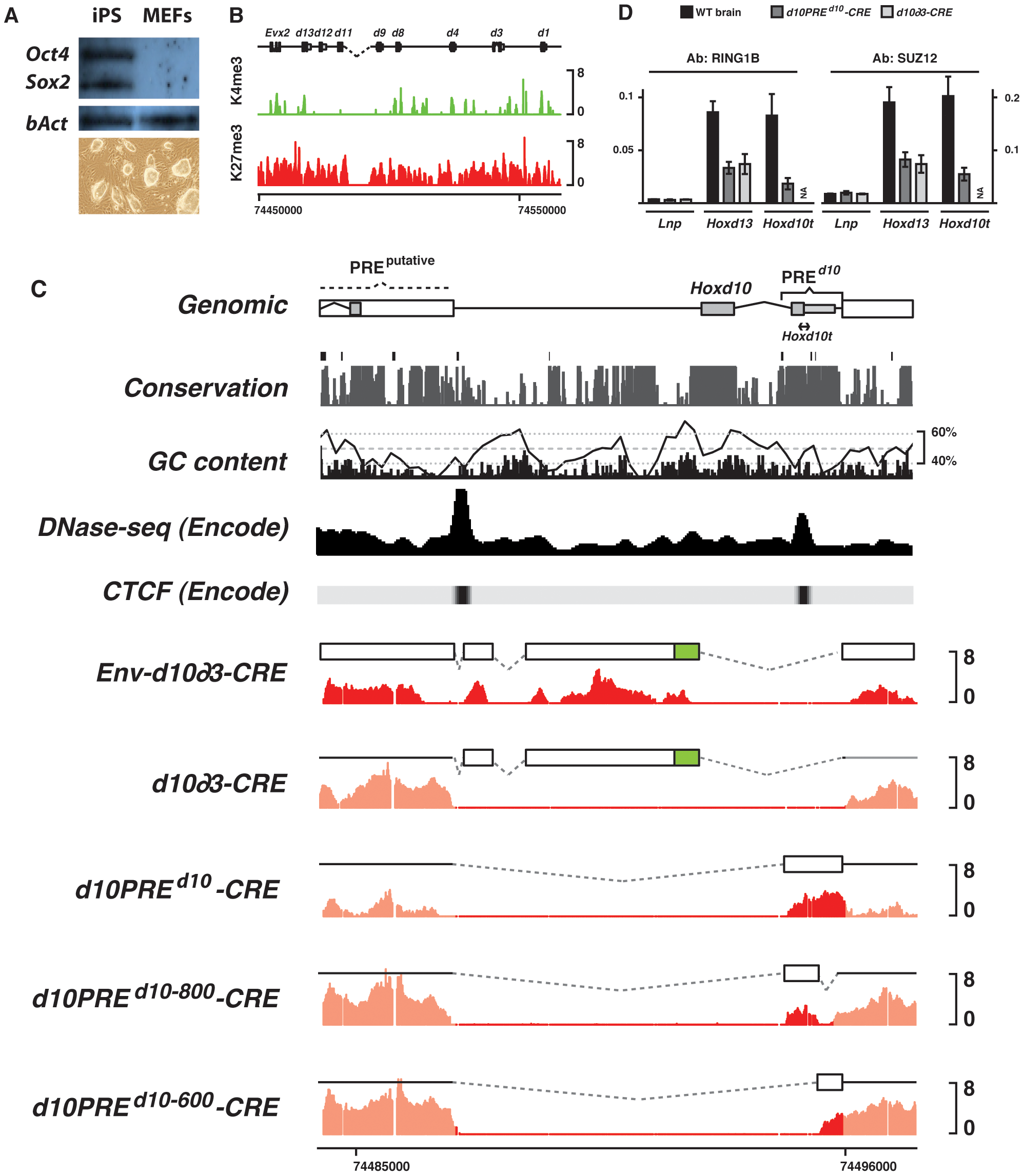 H3K27me3 profiles of transgenic constructs in iPS cells.