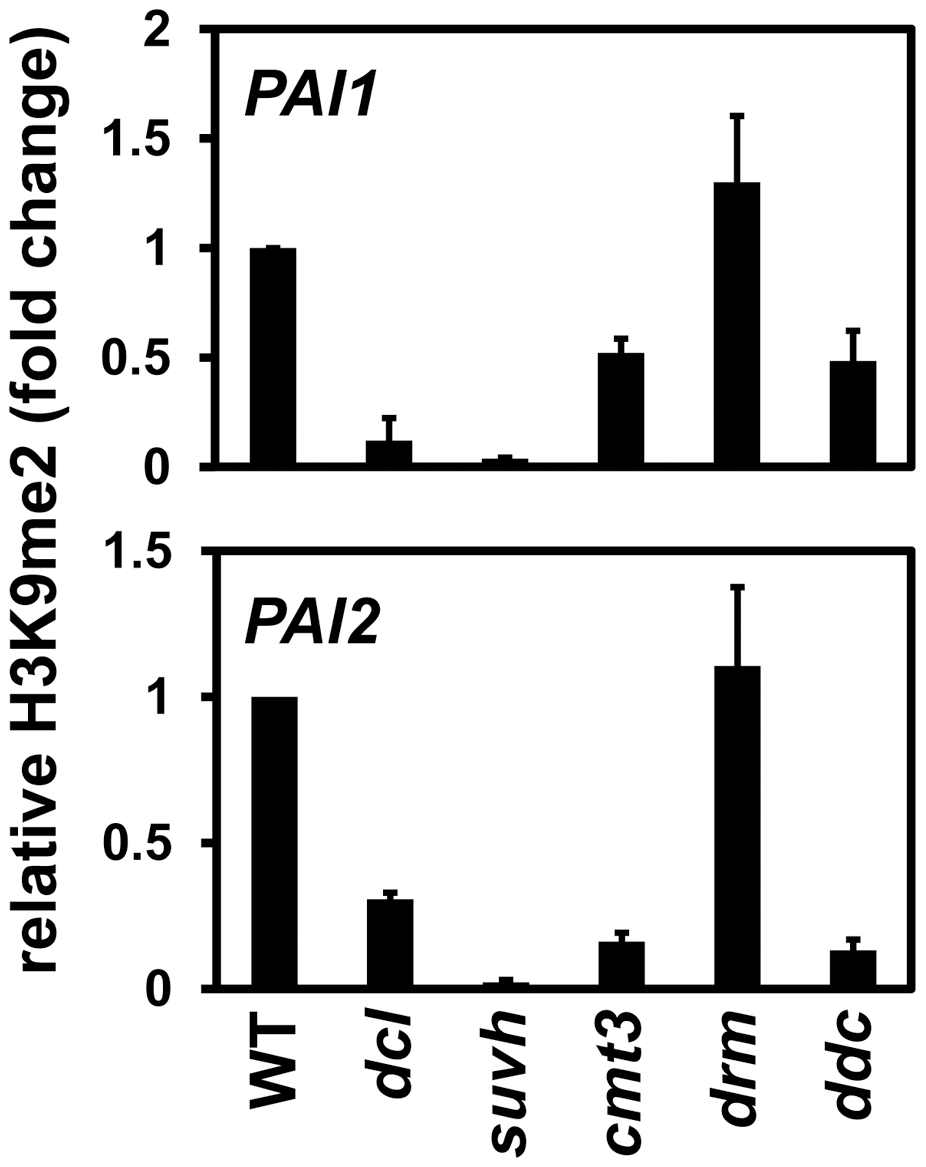 <i>PAI1</i> and <i>PAI2</i> H3K9me2 levels are reduced in the <i>dcl2 dcl3 dcl4</i> mutant.