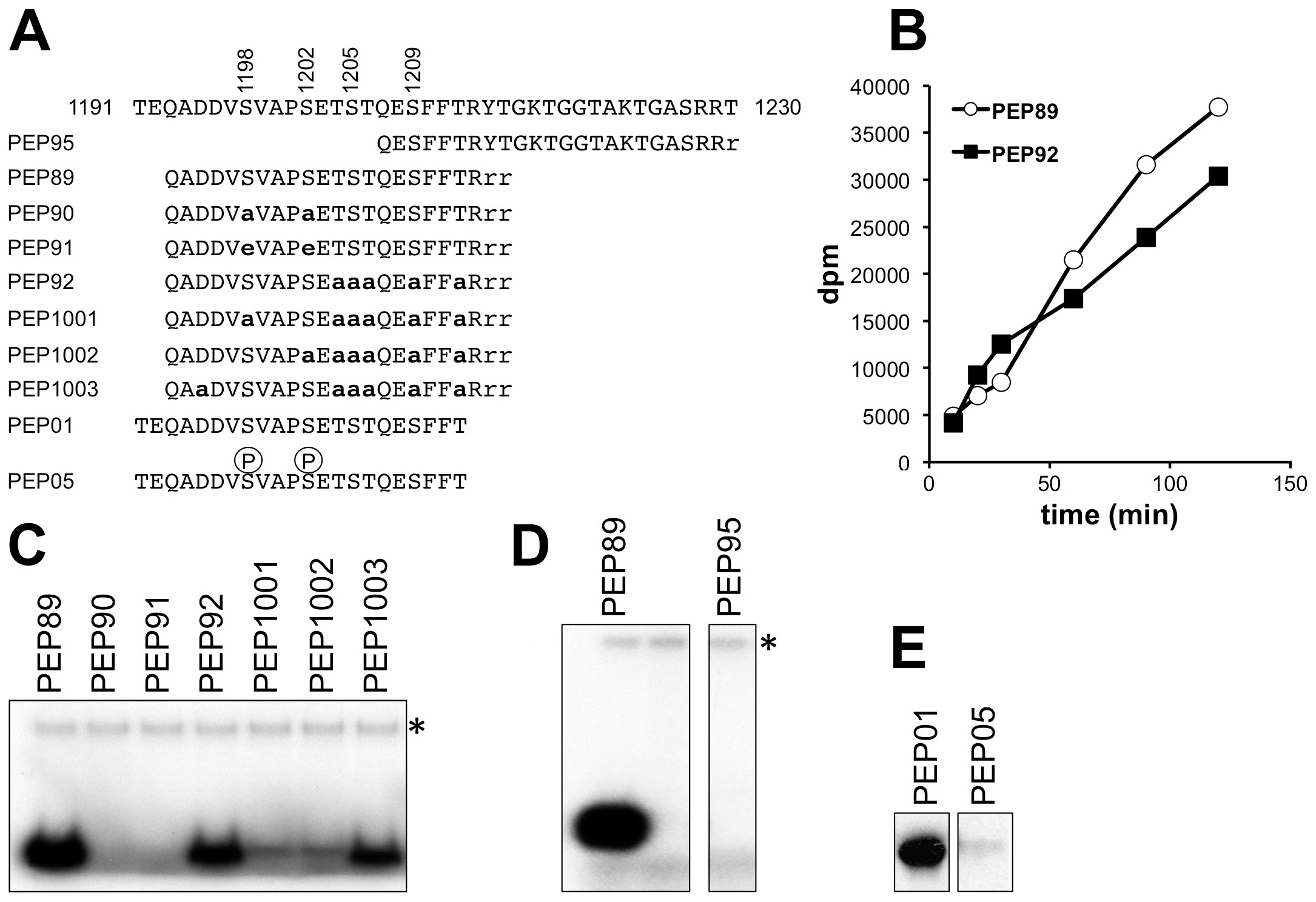 <i>In vitro</i> phosphorylation of peptides corresponding to the Elp1 C-terminal region by Hrr25.