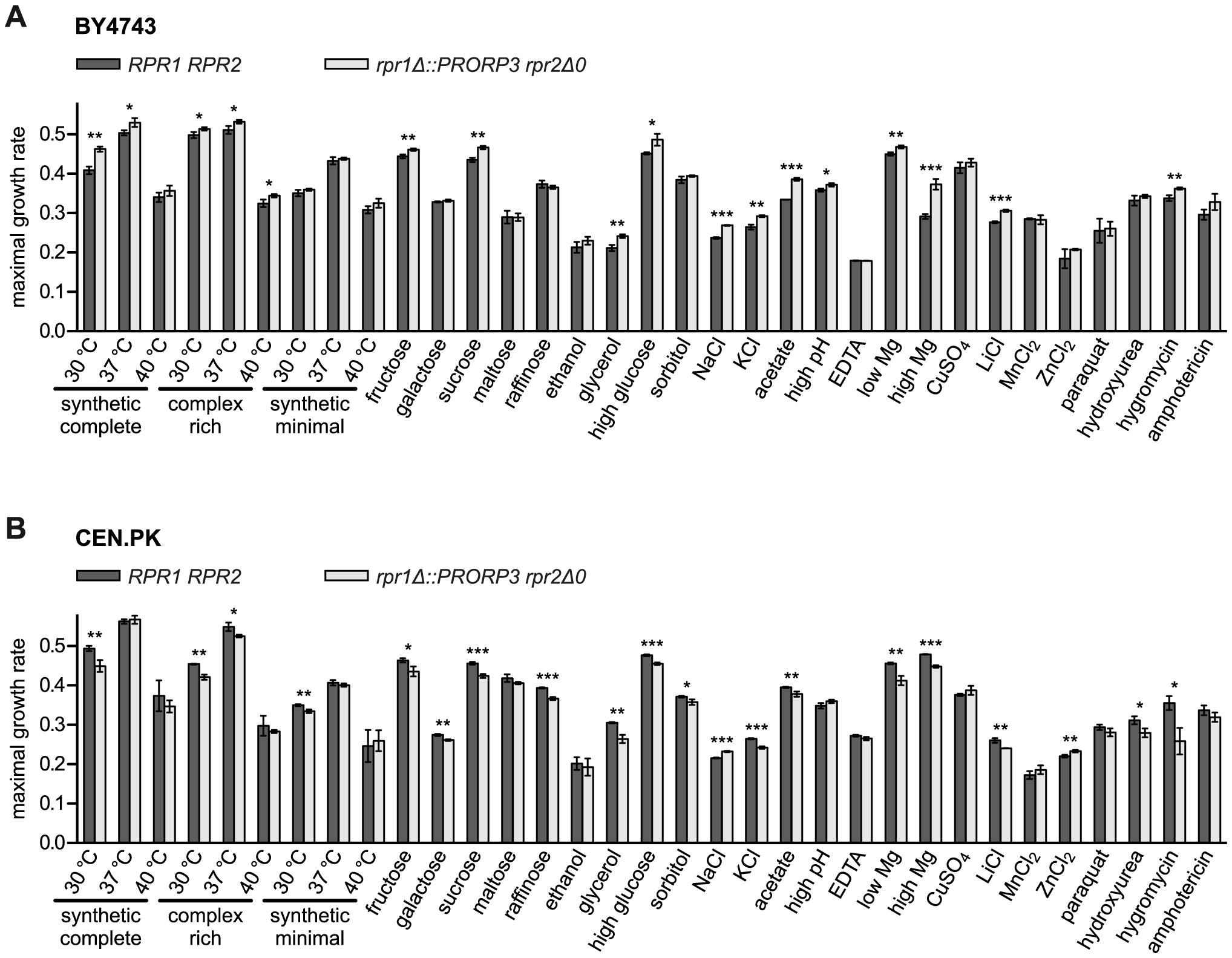Quantitative phenotypic profiling of RNase P-swapped yeast strains.