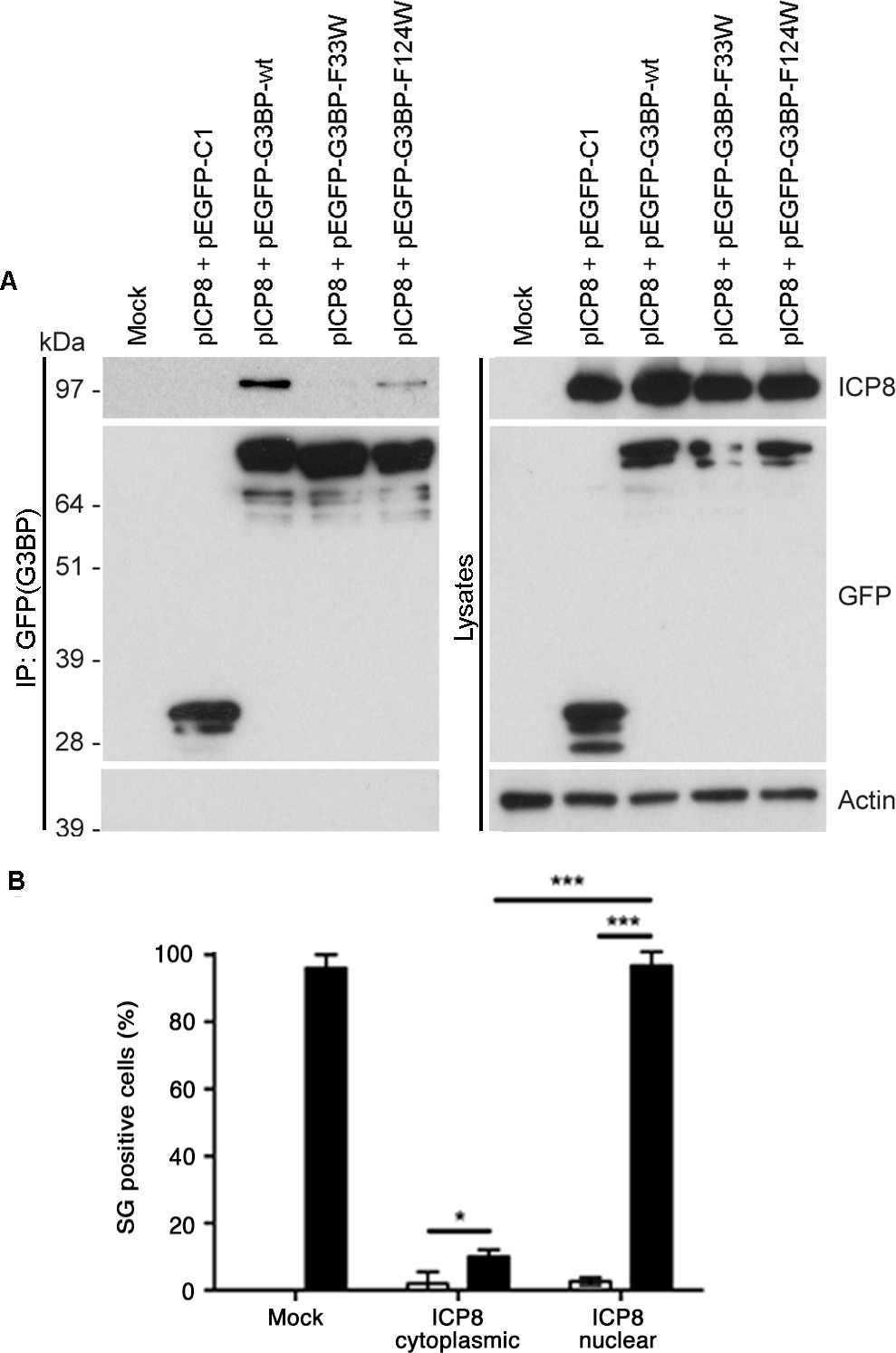 An FGDF motif in HSV-1 ICP8 binds G3BP and inhibits SGs.