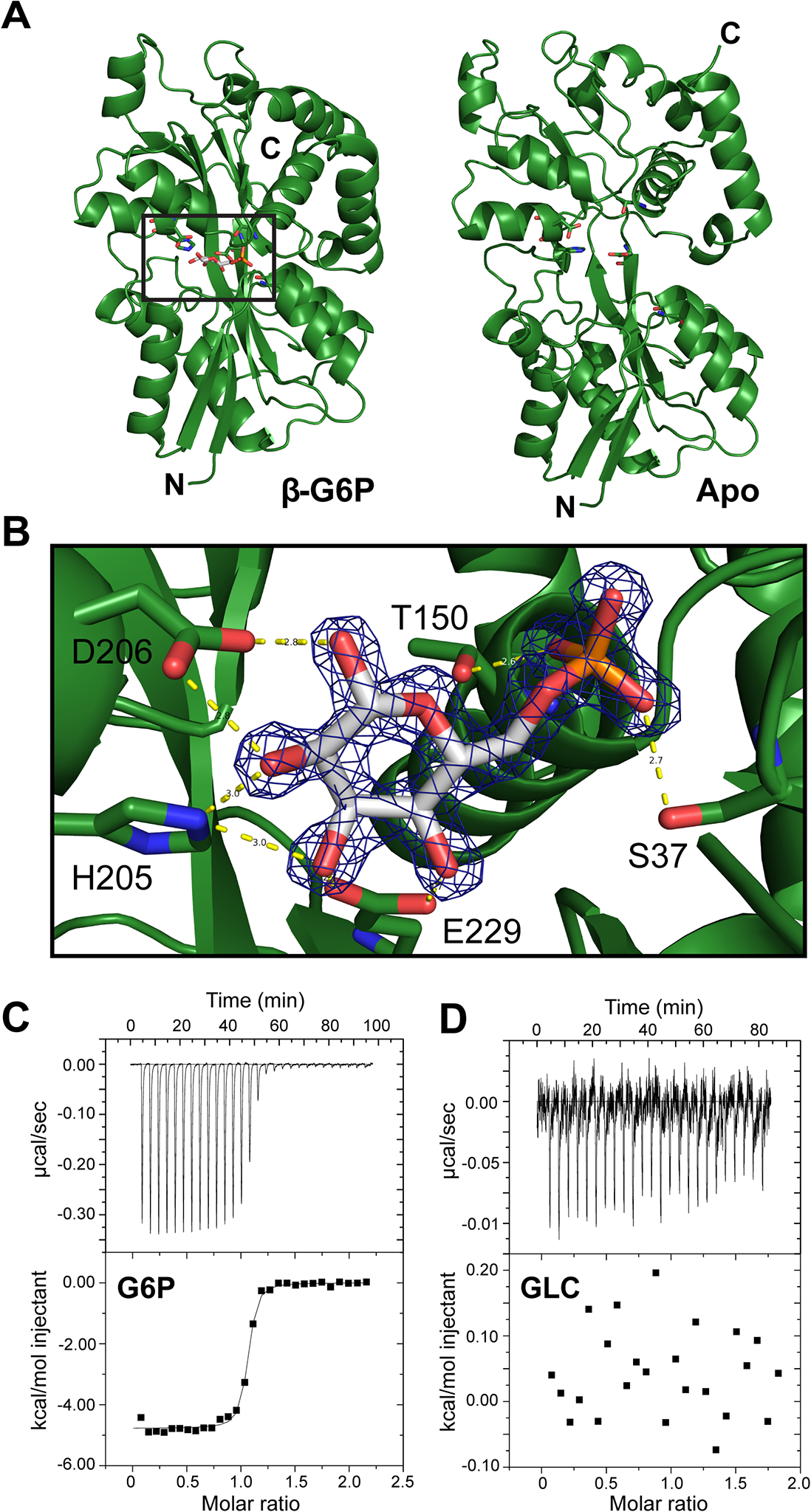 AfuA is a sugar-phosphate specific periplasmic binding protein.