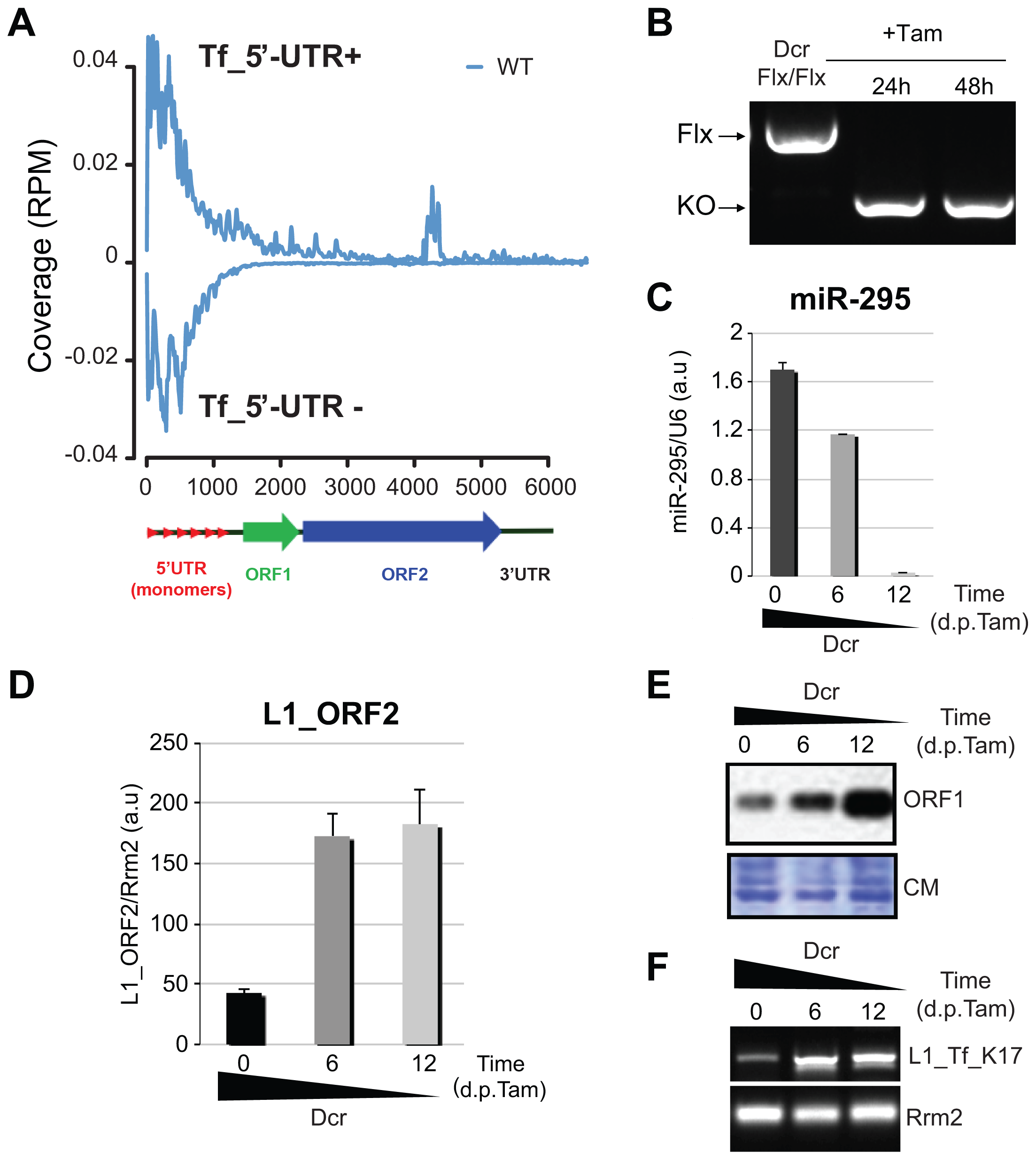 L1 elements are up-regulated in <i>Dcr<sup>−/−</sup></i> mESCs.