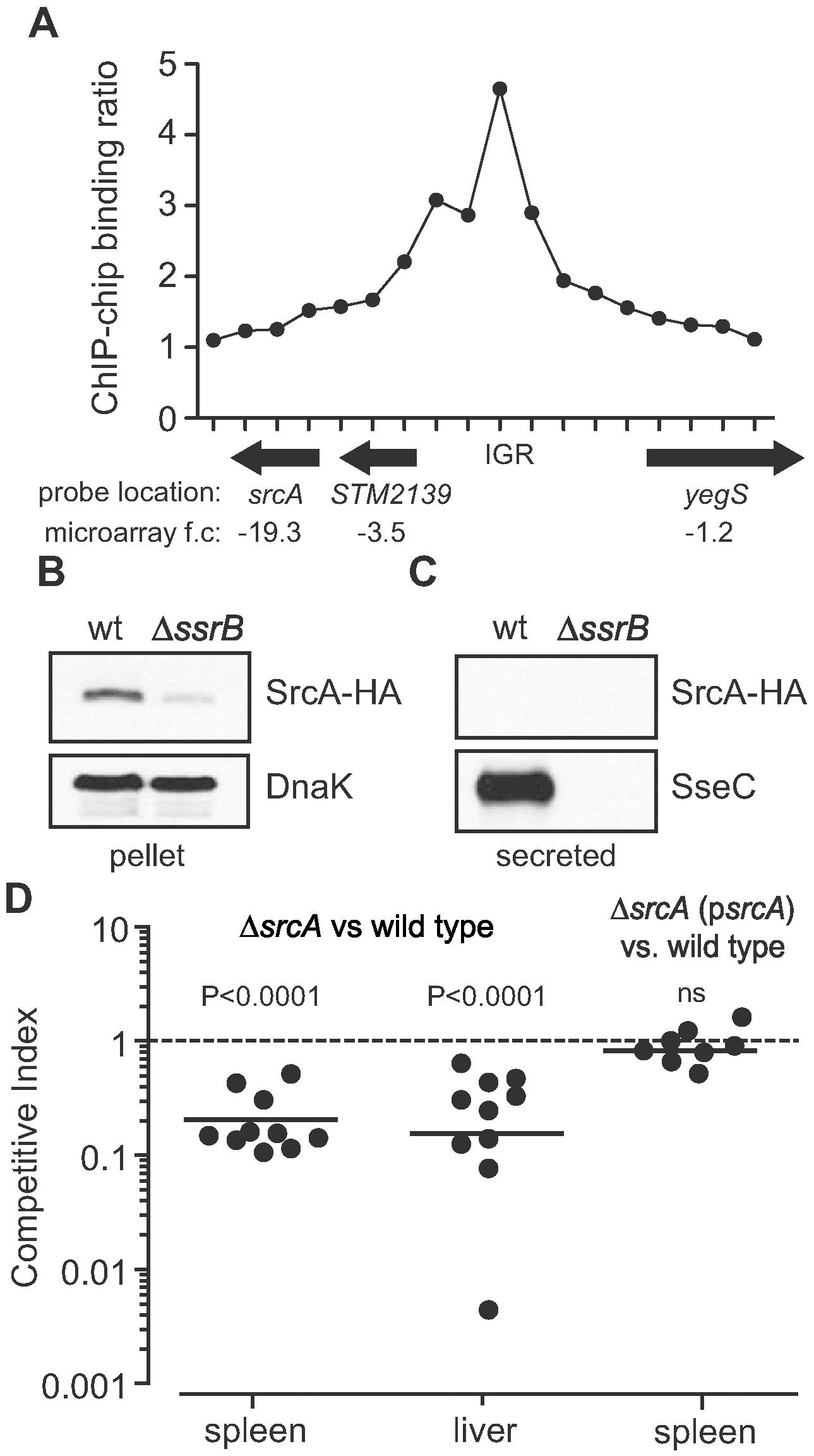 Identification of an SsrB-regulated gene, <i>srcA</i>.