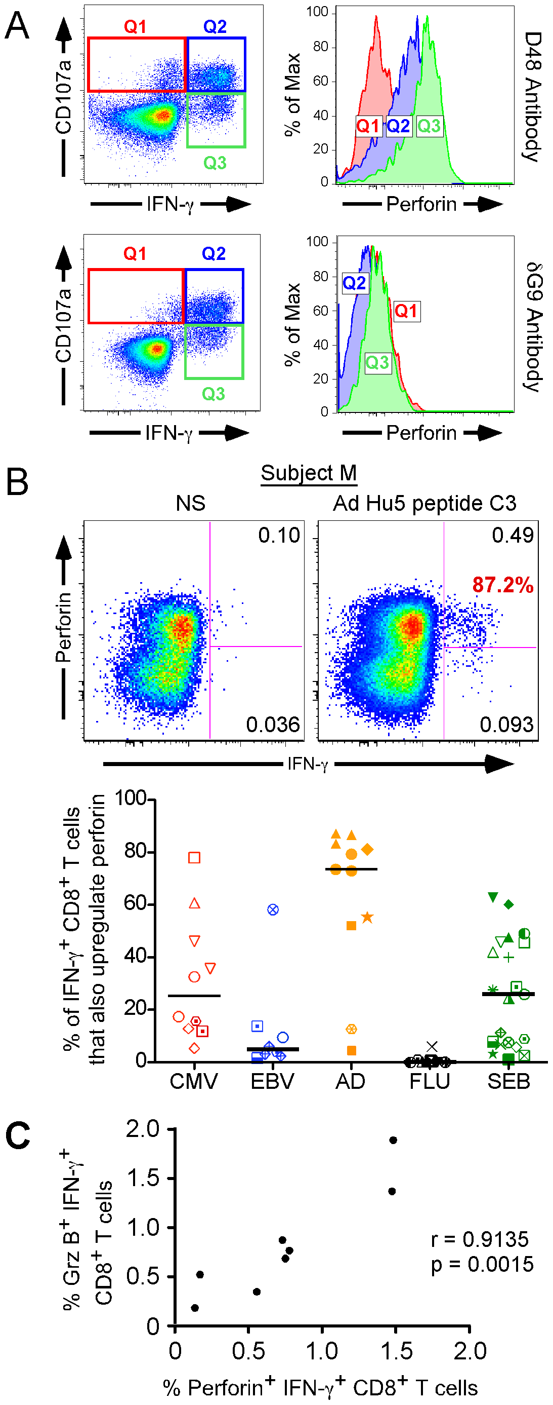 Perforin upregulation by CD8<sup>+</sup> T cells after peptide-specific activation.