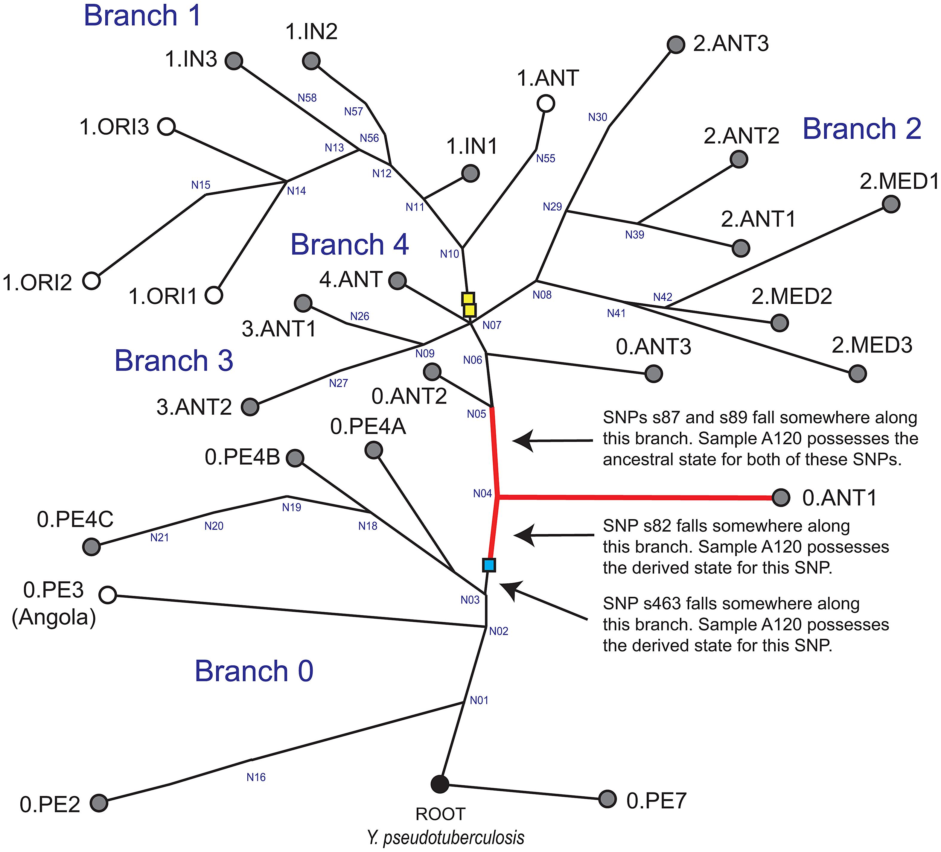 Global phylogeny for <i>Y.</i> <i>pestis</i>.