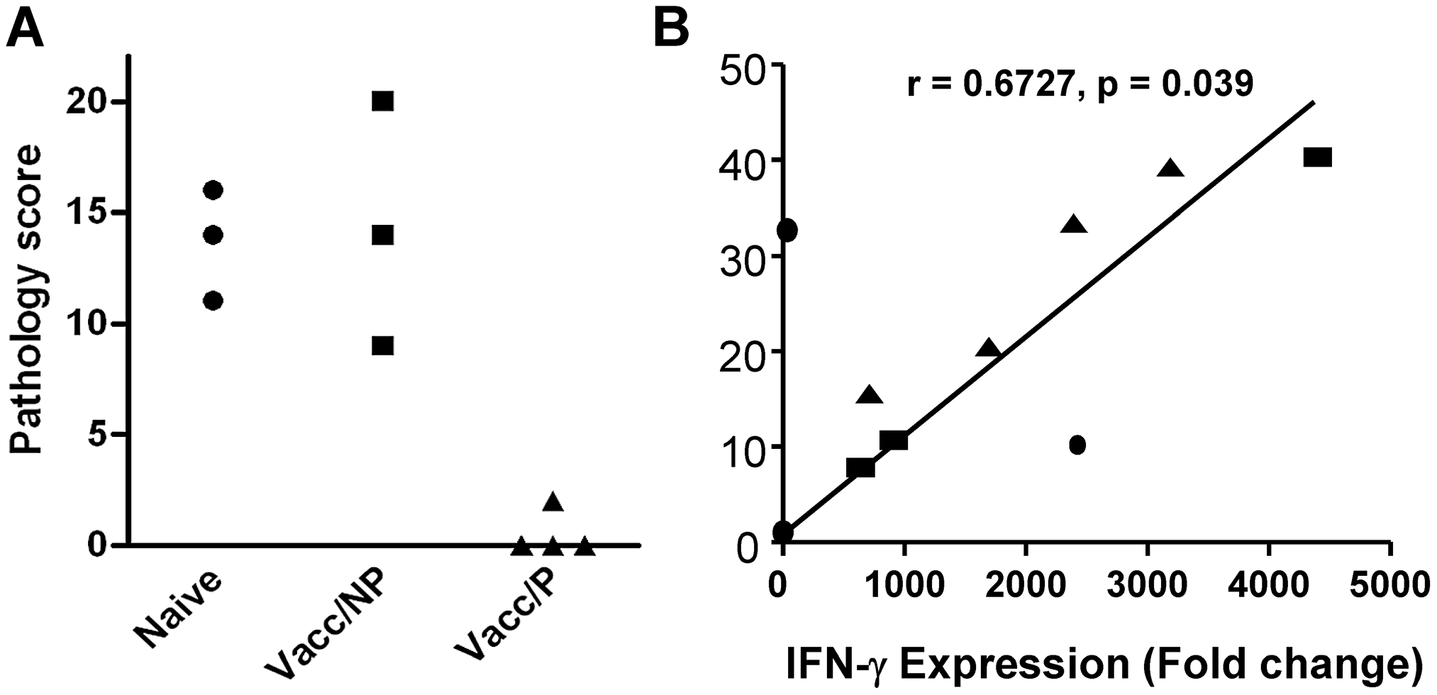 Protection and <i>in vitro</i> IFN-γ responses prior to challenge.