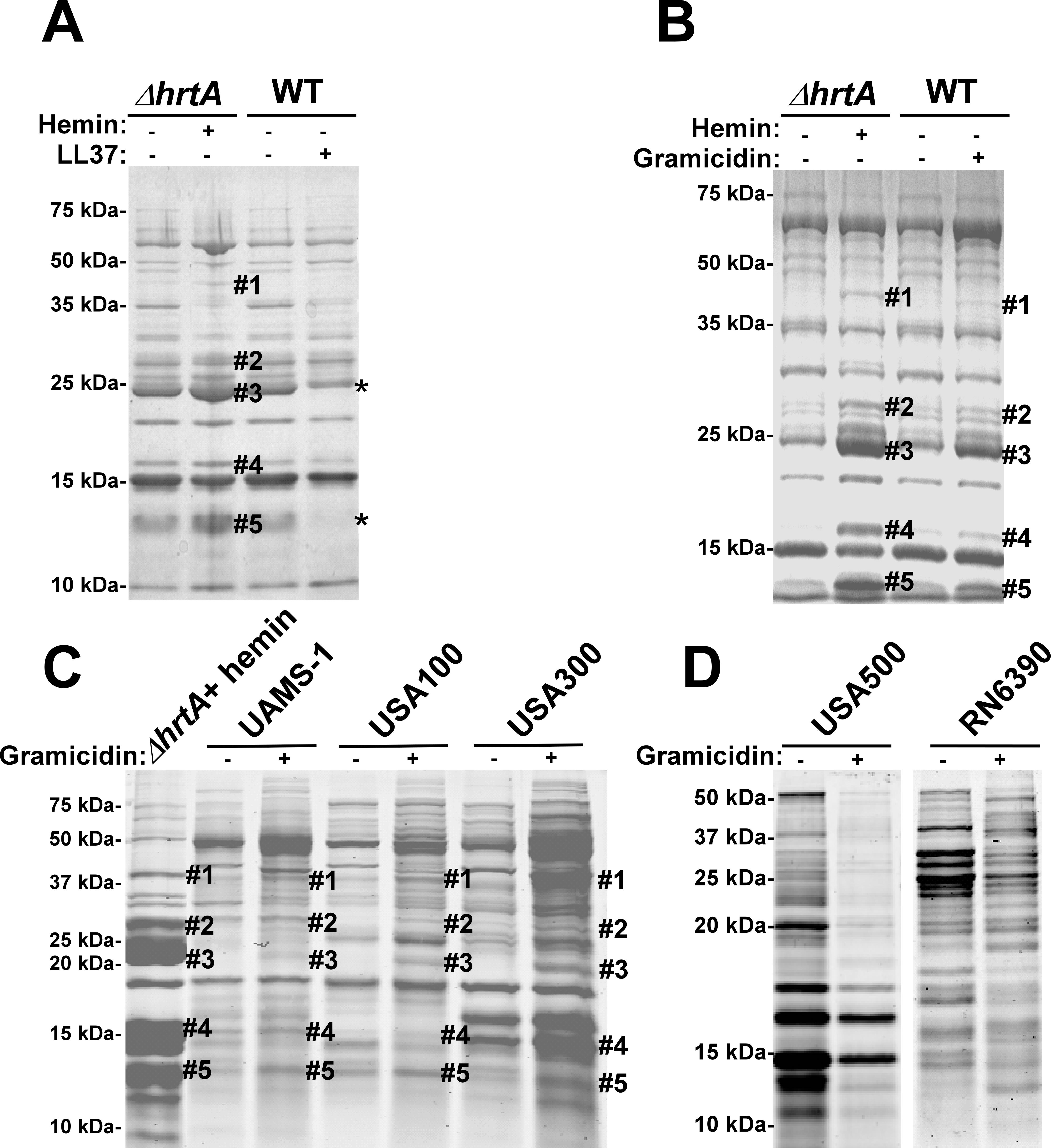 Membrane pore formation but not generalized membrane damage mimics the effect of hemin on <i>ΔhrtA</i>.