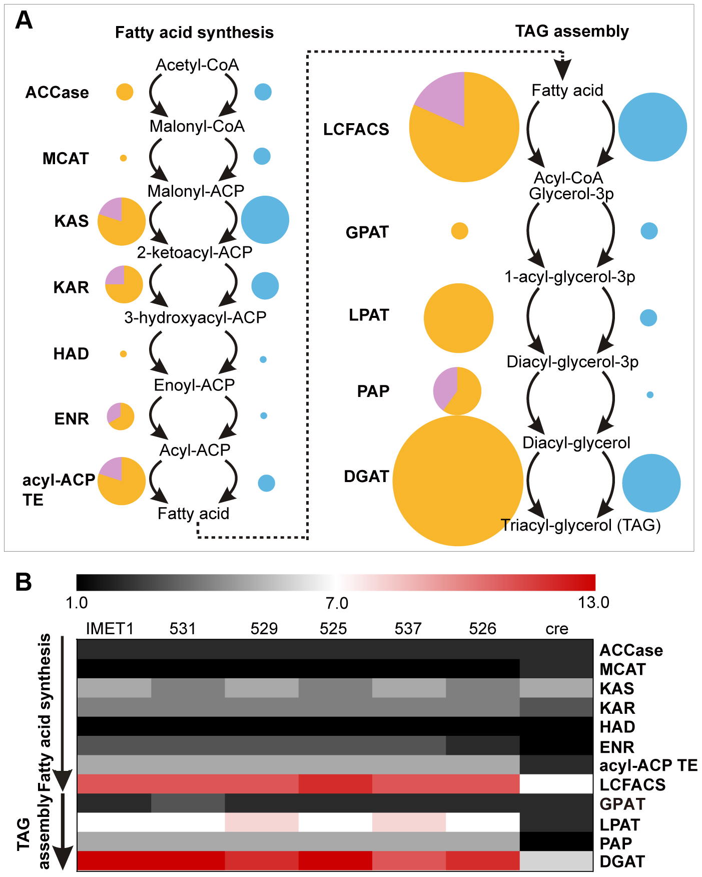 Enrichment of lipid biosynthesis genes in each of the six <i>Nannochloropsis</i> strains.