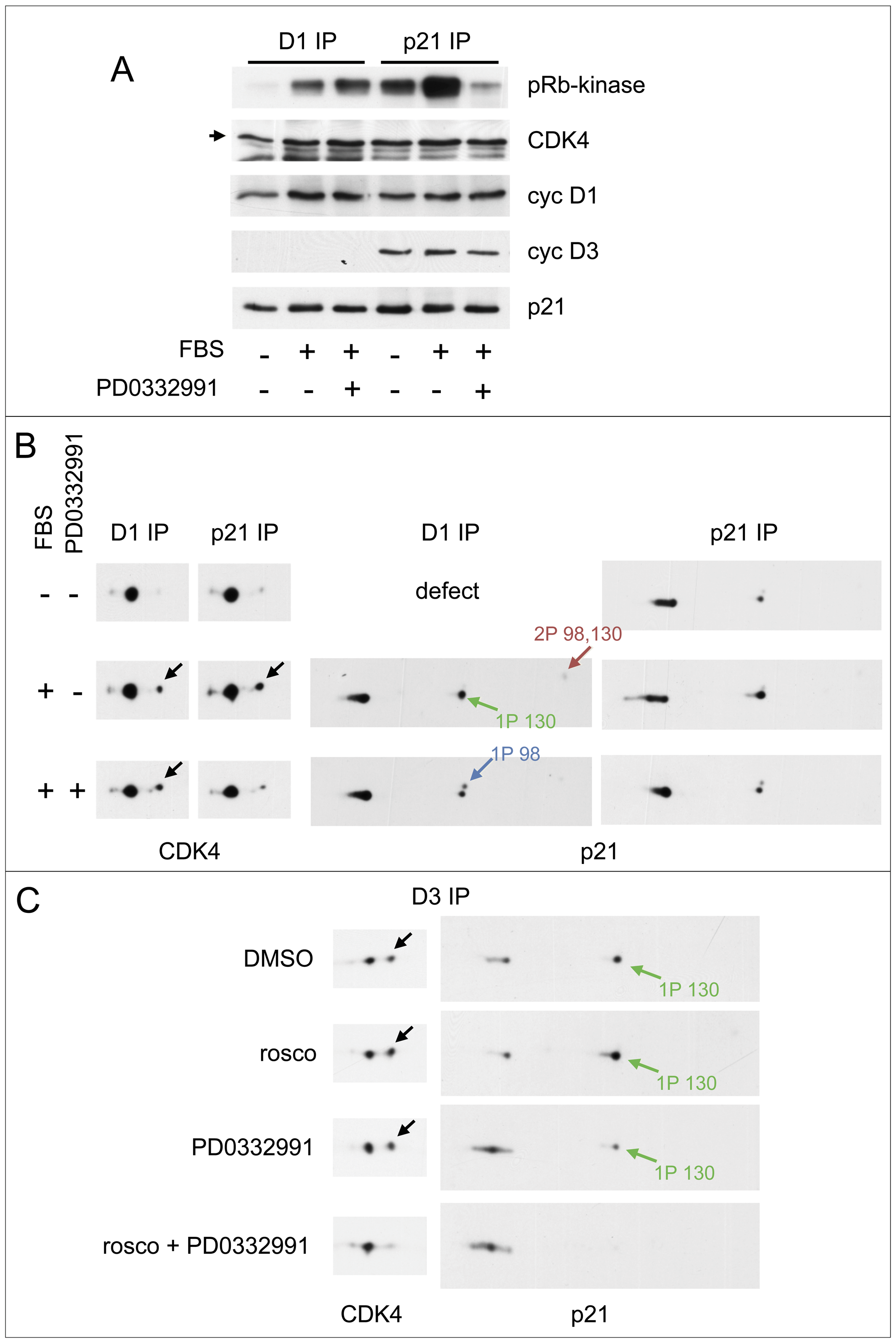 Activities of both CDK4/6 and CDK2 are required for S130 phosphorylation of p21 and activation of p21-bound CDK4.