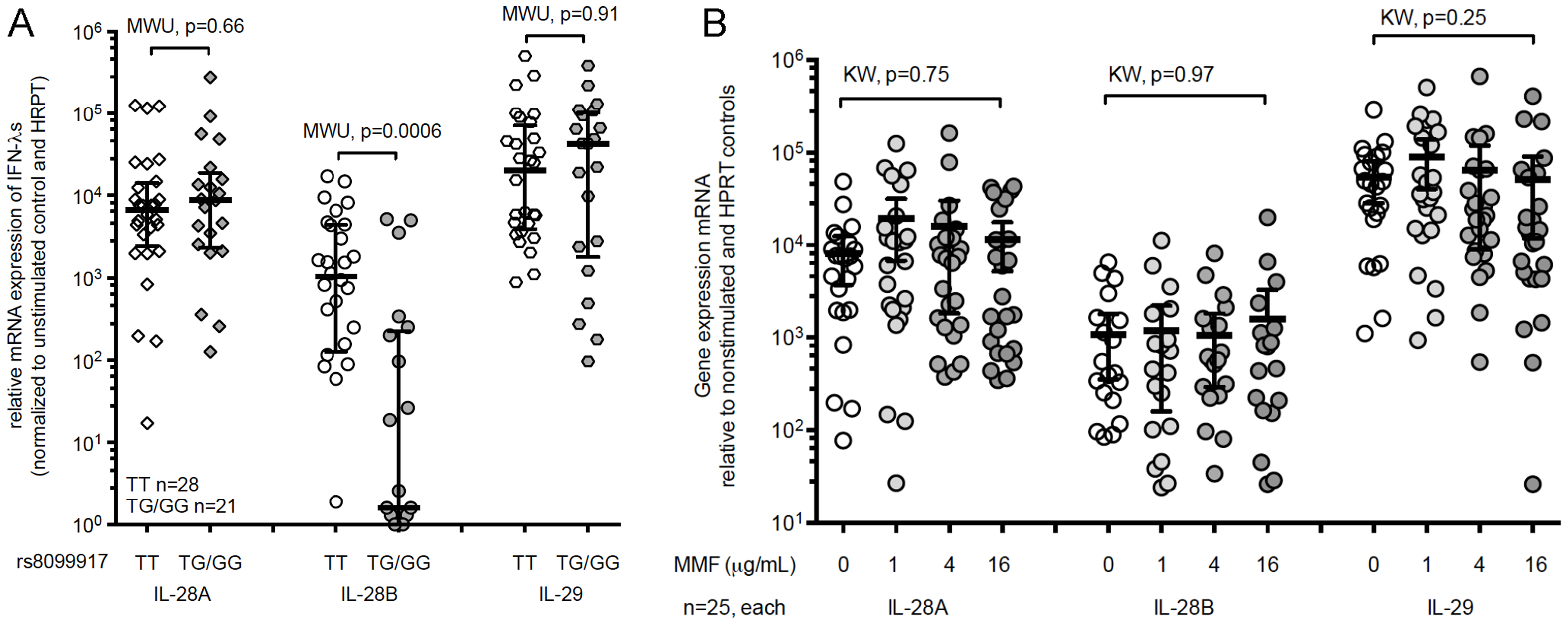 The minor-allele IL-28B genotype is associated with significantly lower expression of IL-28B, but not IL-29 or IL-28A mRNA in healthy volunteers.