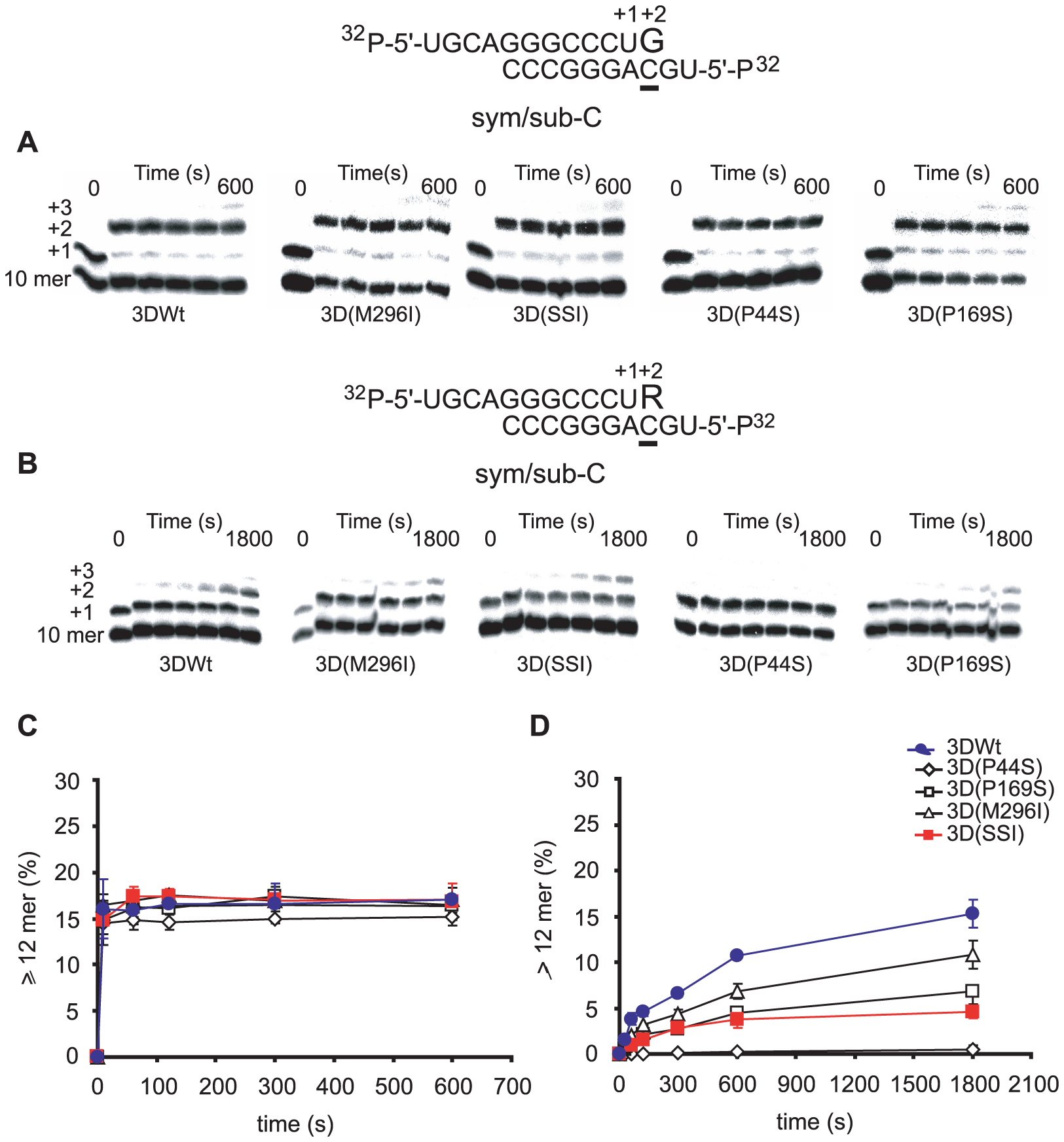Incorporation of nucleotides into sym/sub-AC by mutant FMDV polymerases.