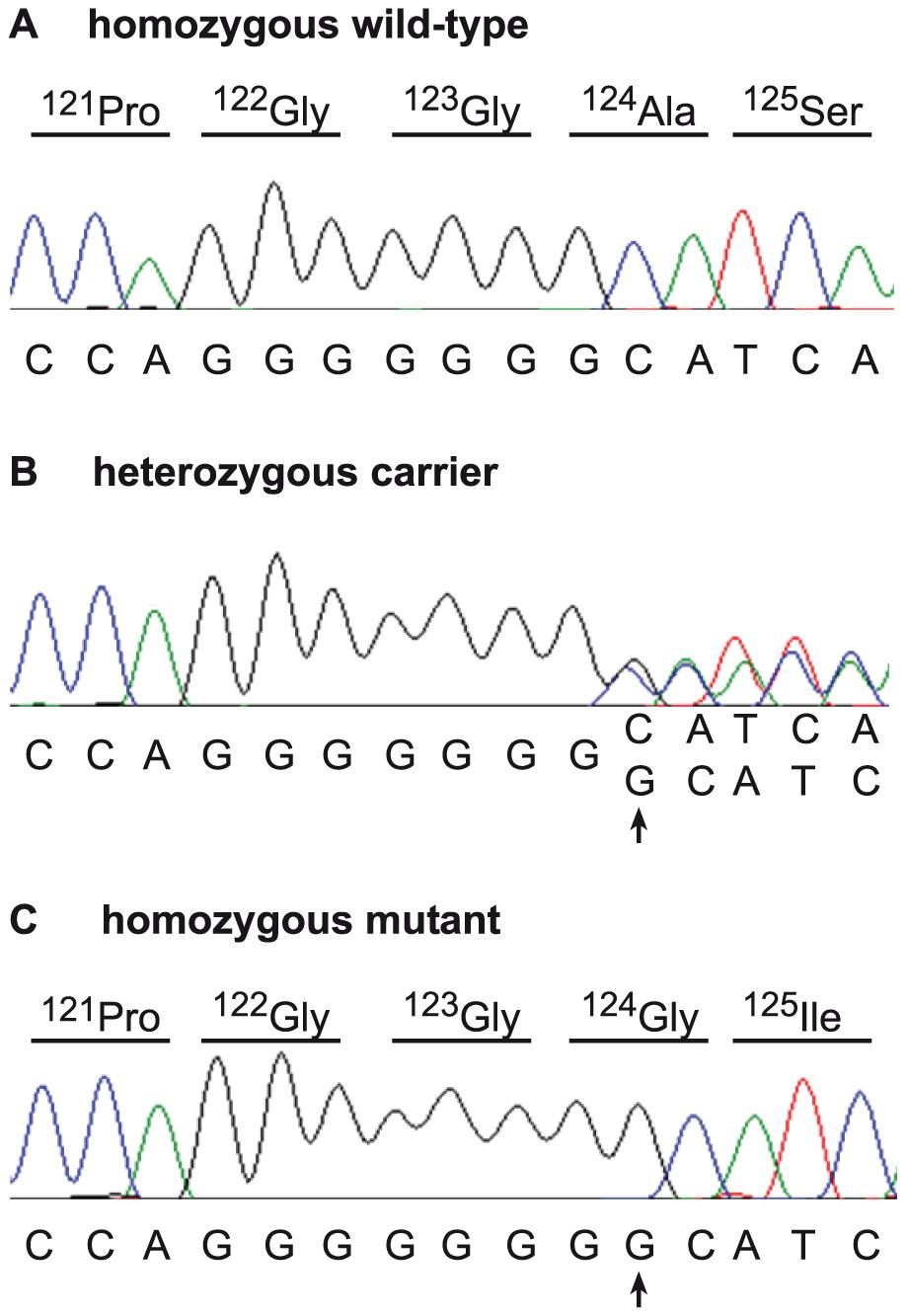 Mutation identification in the bovine <i>SUOX</i> gene.