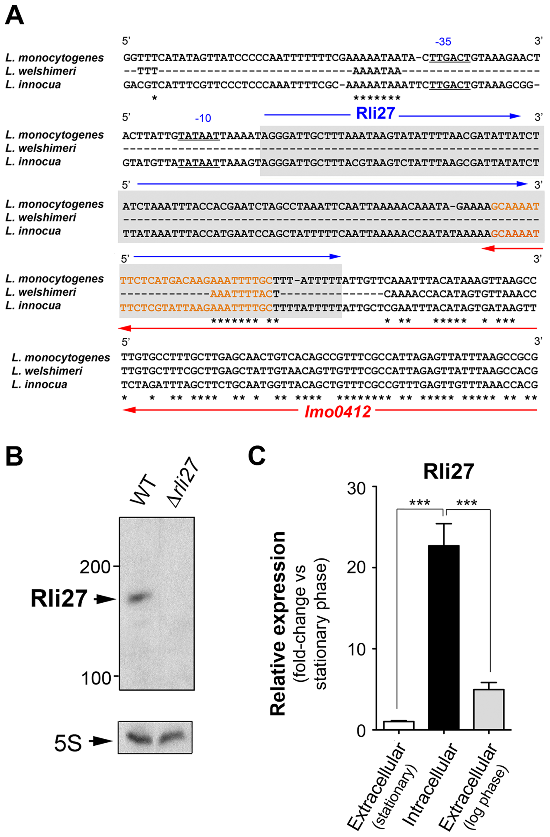Rli27 is a bona fide <i>L. monocytogenes</i> sRNA induced by intracellular bacteria.