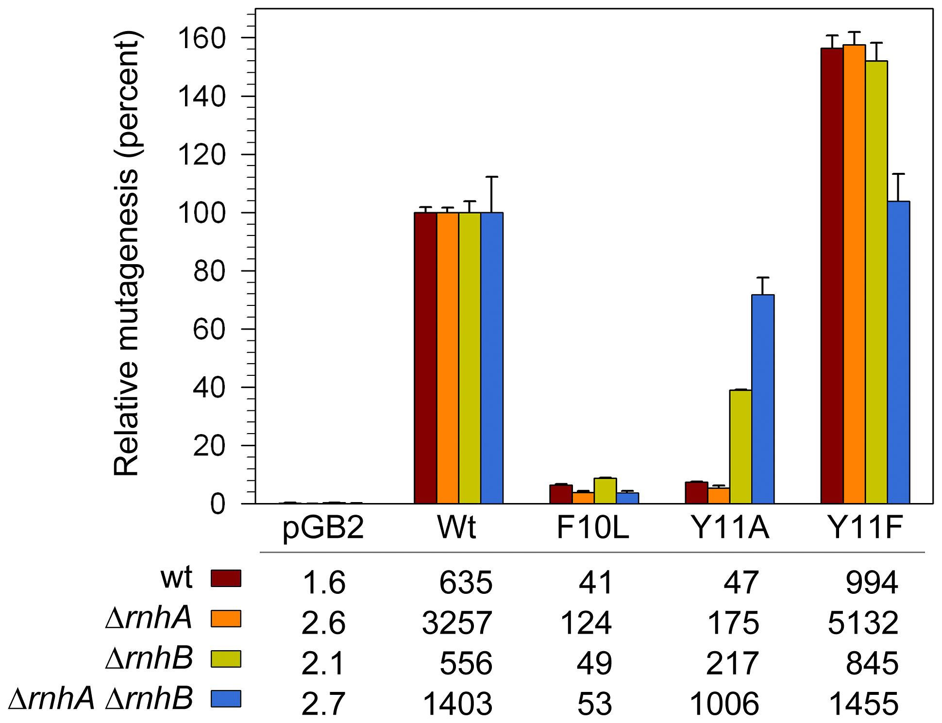 Effect of Δ<i>rnhA</i> and Δ<i>rnhB</i> on spontaneous mutagenesis in <i>recA730 lexA</i>(Def) Δ<i>umuDC</i> Δ<i>dinB</i> strains expressing pol V variants.