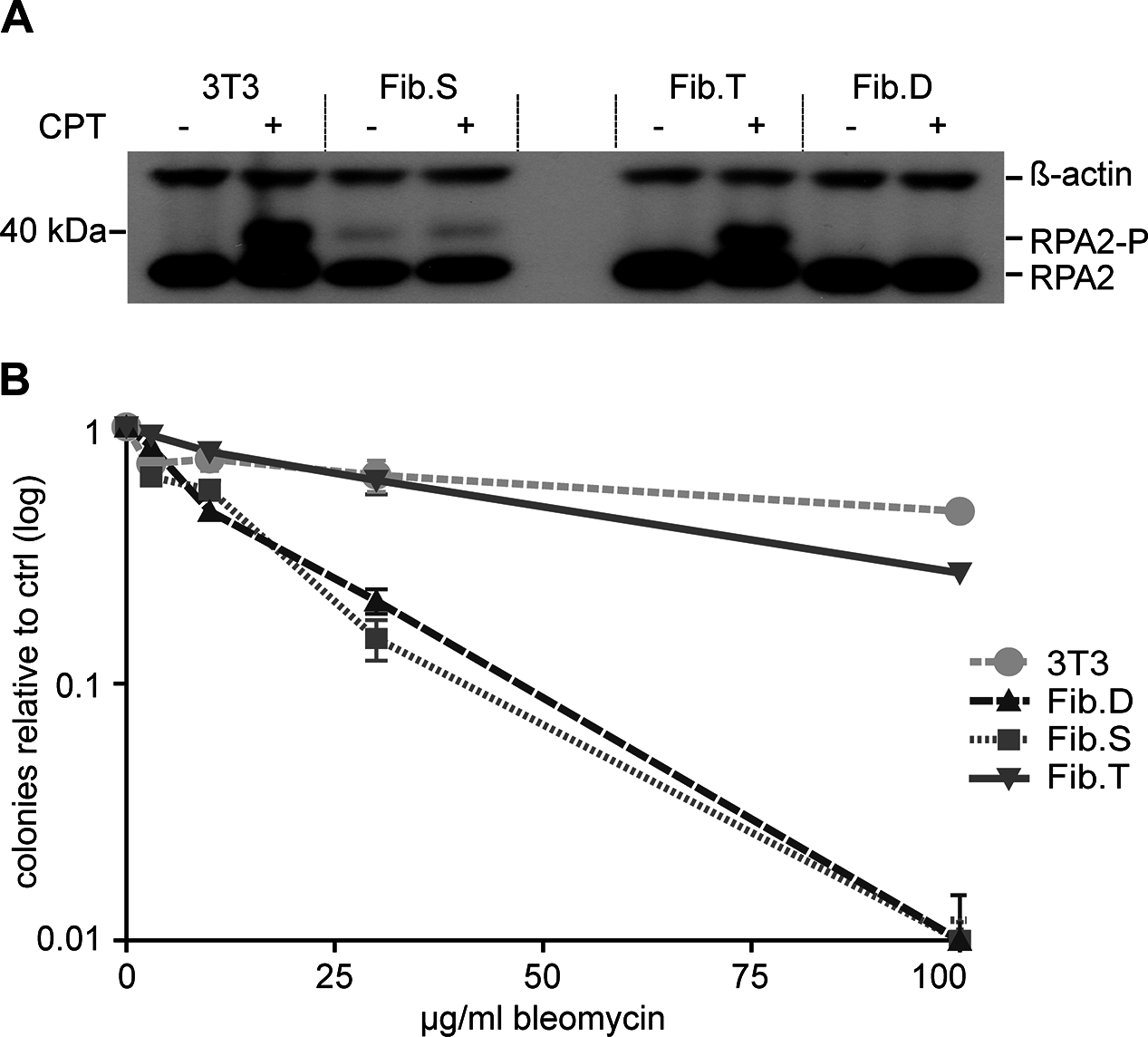 Functional correction of RS-SCID fibroblasts.