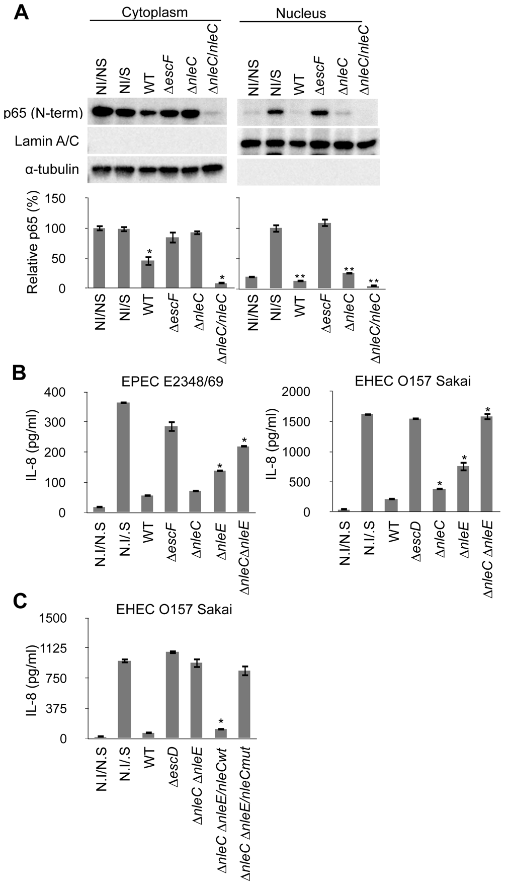 Concurrent deficiency in <i>nleE</i> and <i>nleC</i> impedes the immune-suppressive ability of EPEC/EHEC.