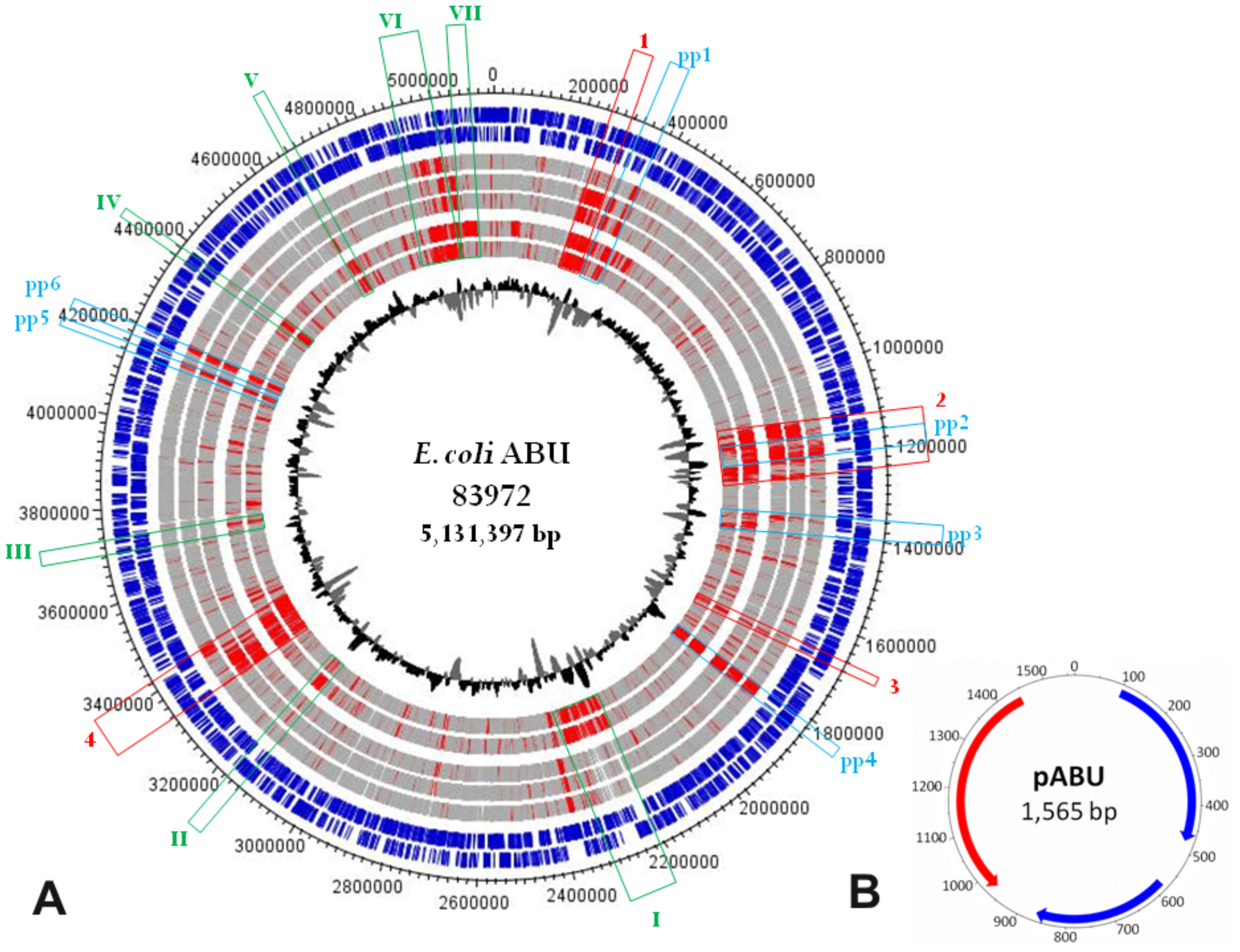 Genetic map of the <i>E. coli</i> 83972 chromosome and the small plasmid pABU.