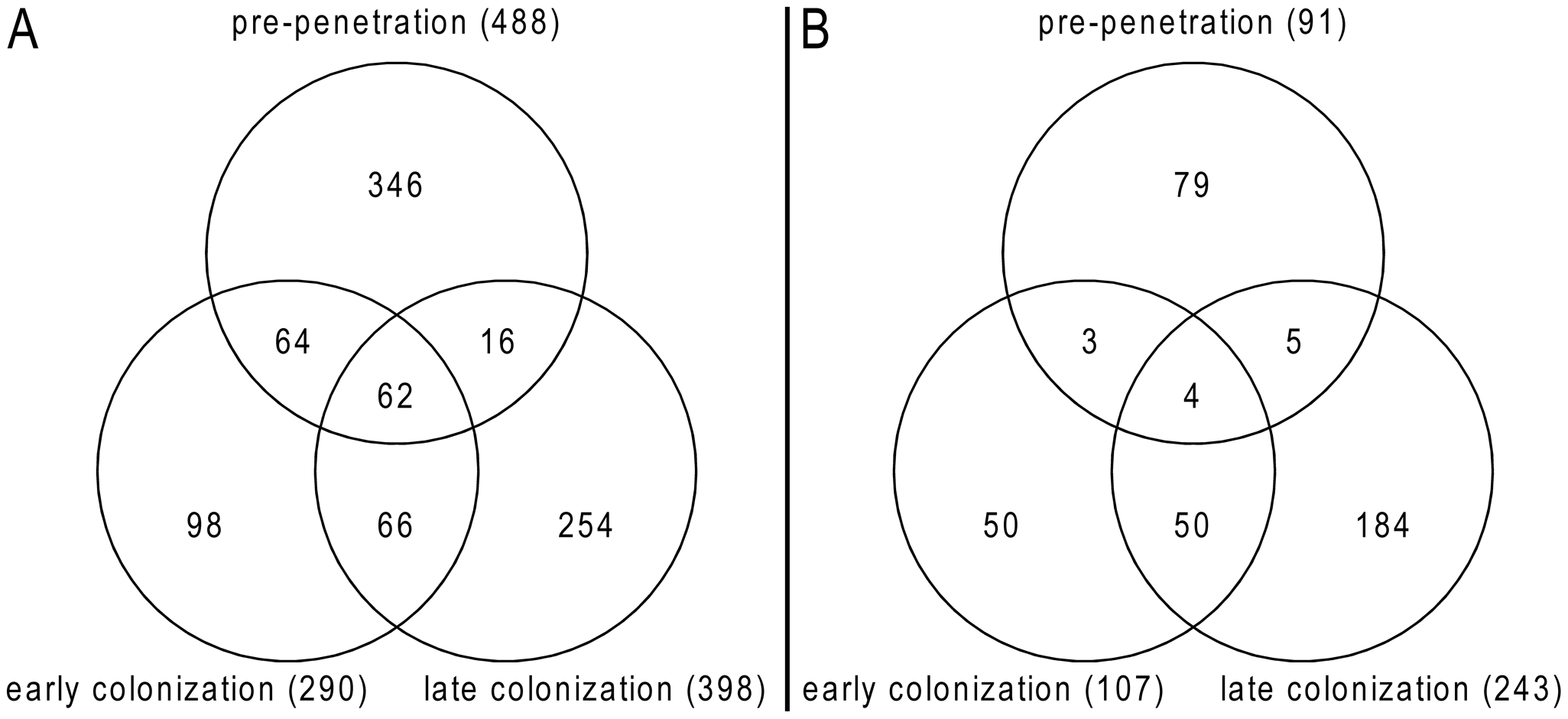 Venn diagrams showing <i>P. indica</i> genes regulated during root colonization.