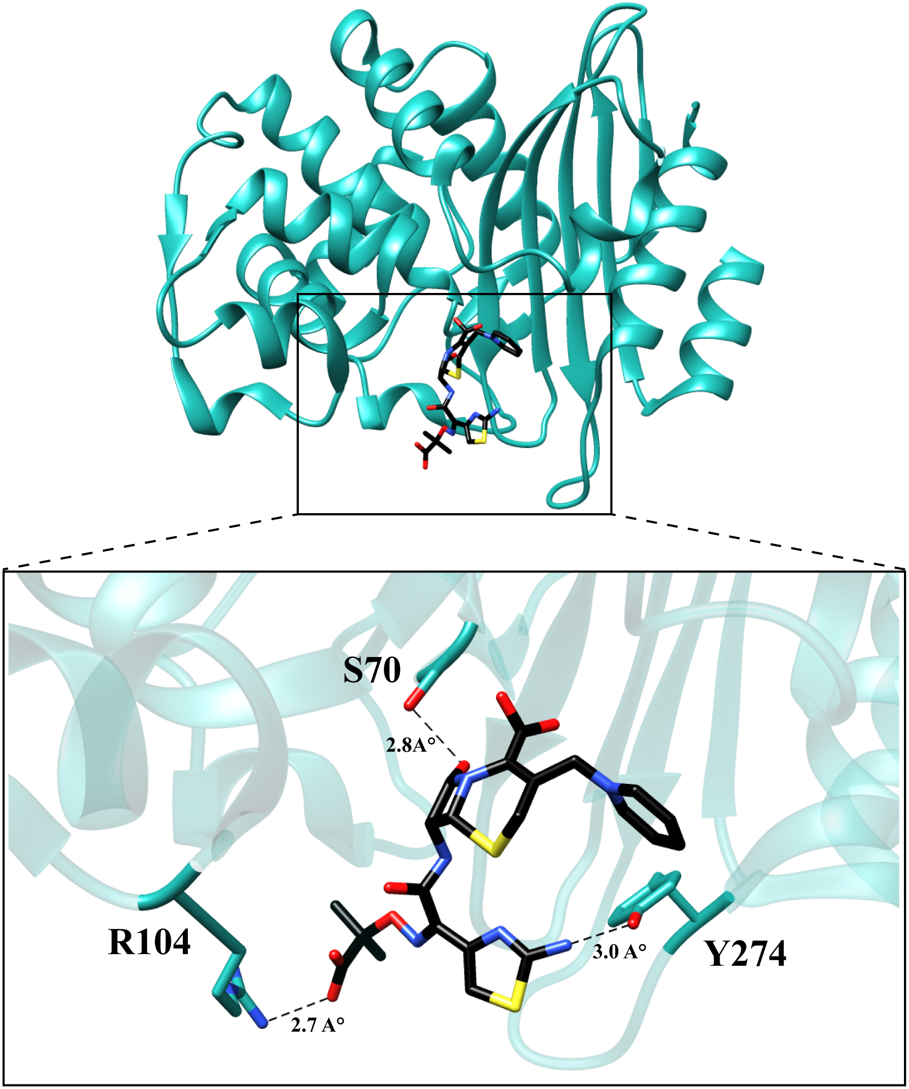 Molecular model of ceftazidime binding to the variant P104R:H274Y (KPC-10).
