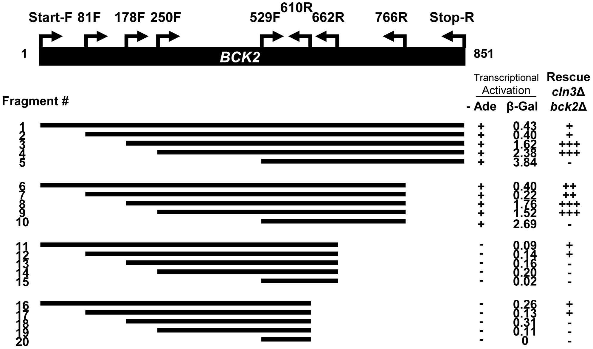 Truncation analysis of the <i>BCK2</i> gene.