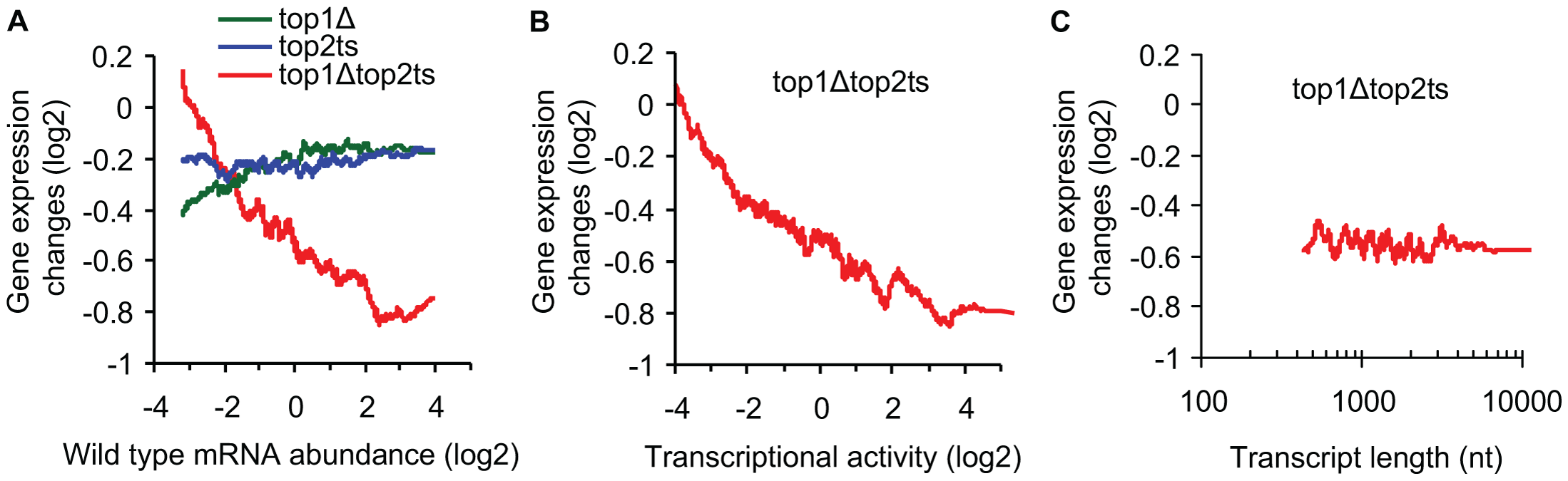 Transcriptional activity and not transcript length reflects topoisomerase dependency.