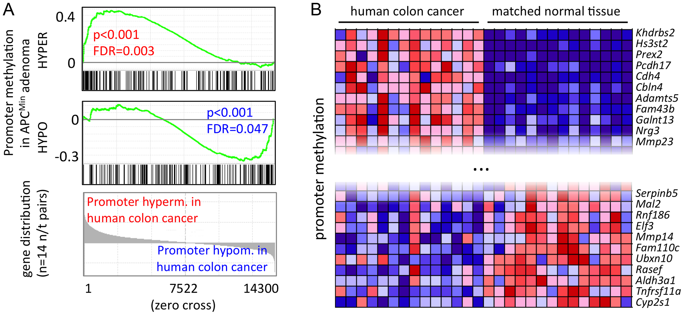 A core set of APC<sup>Min</sup> adenoma-specific CpG methylation patterns is conserved in human colon cancer.