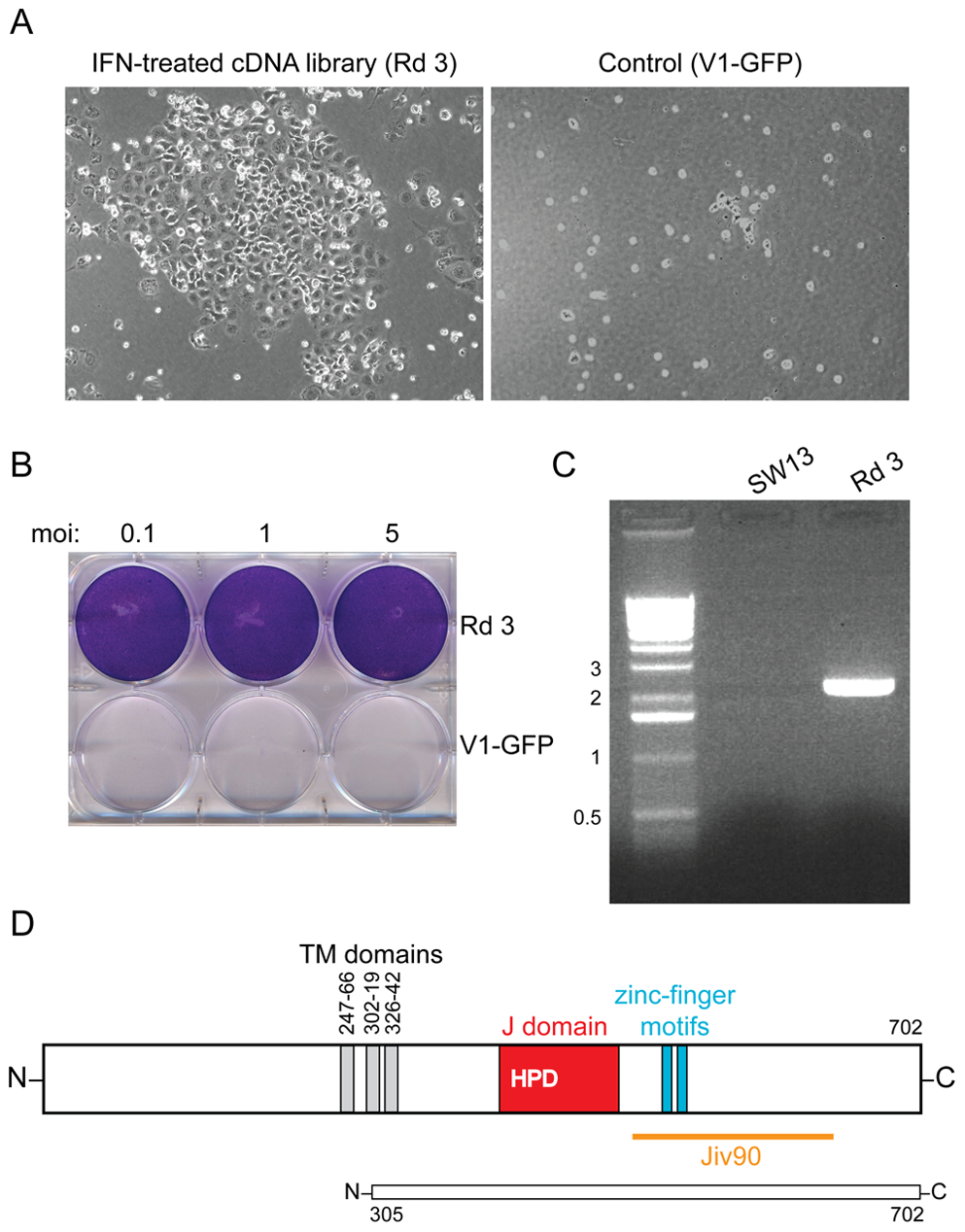 DNAJC14 confers resistance to YFV-induced cell death.
